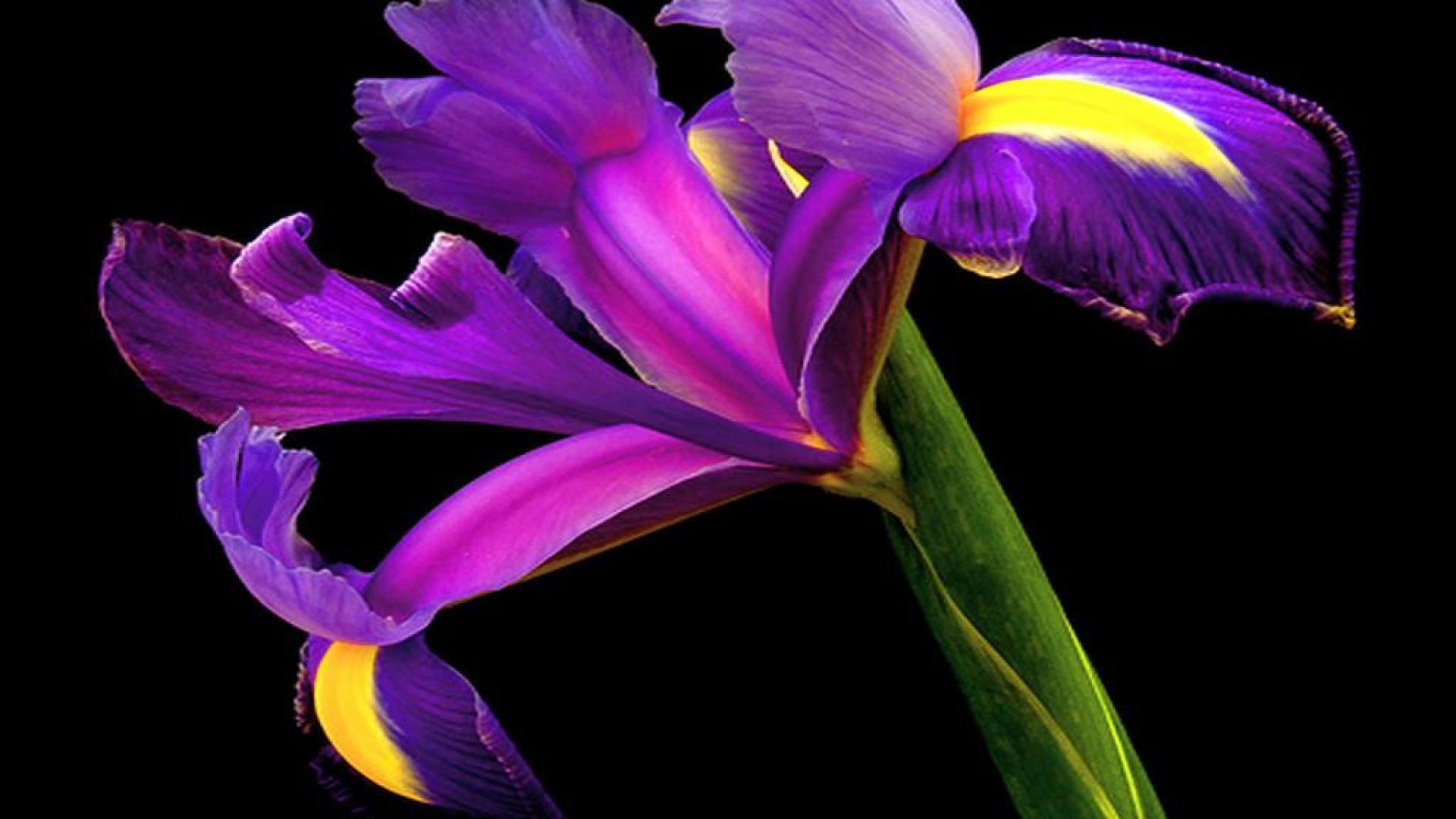 Картинки цветок на черном фоне