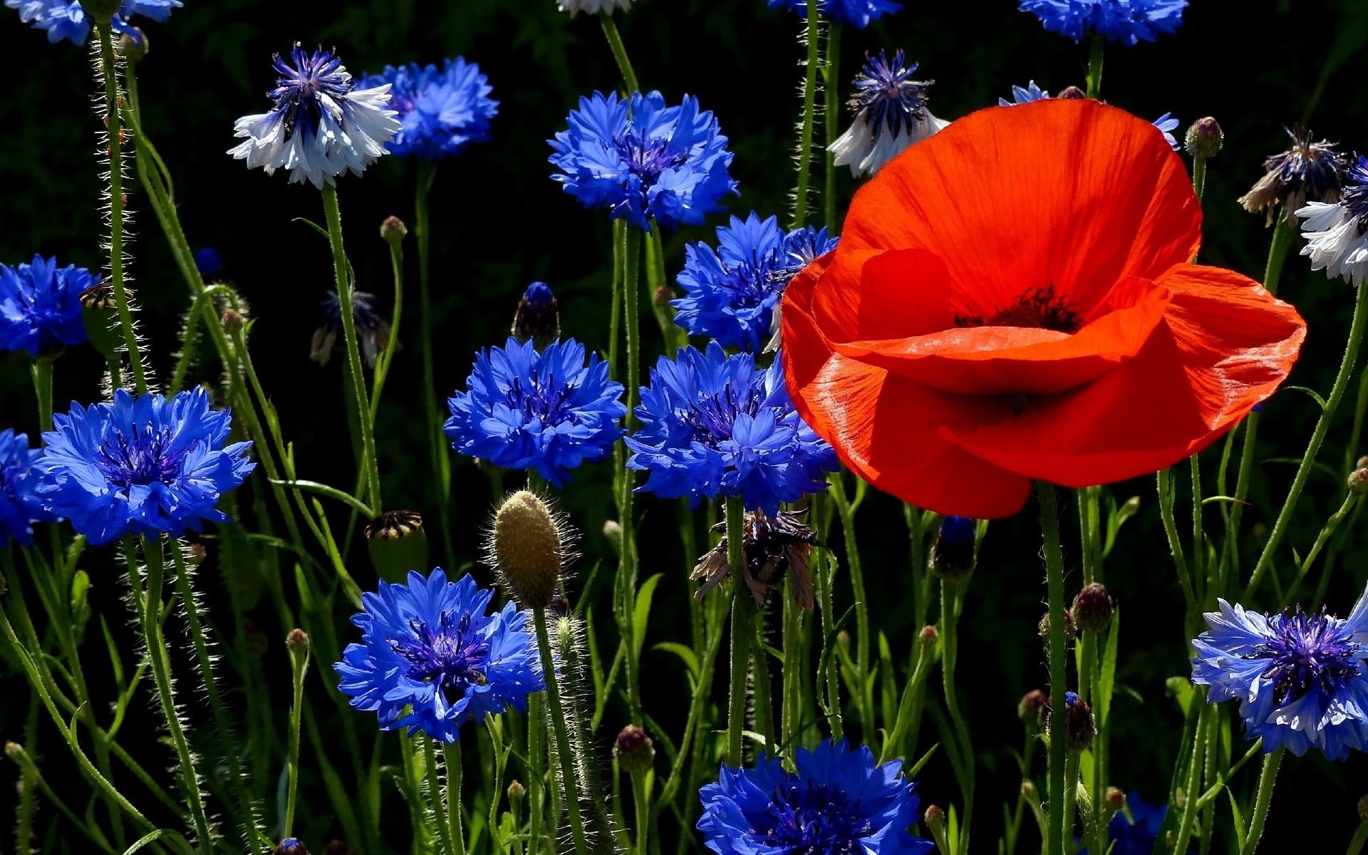Красивые картинки с цветами на телефон, открытки днем