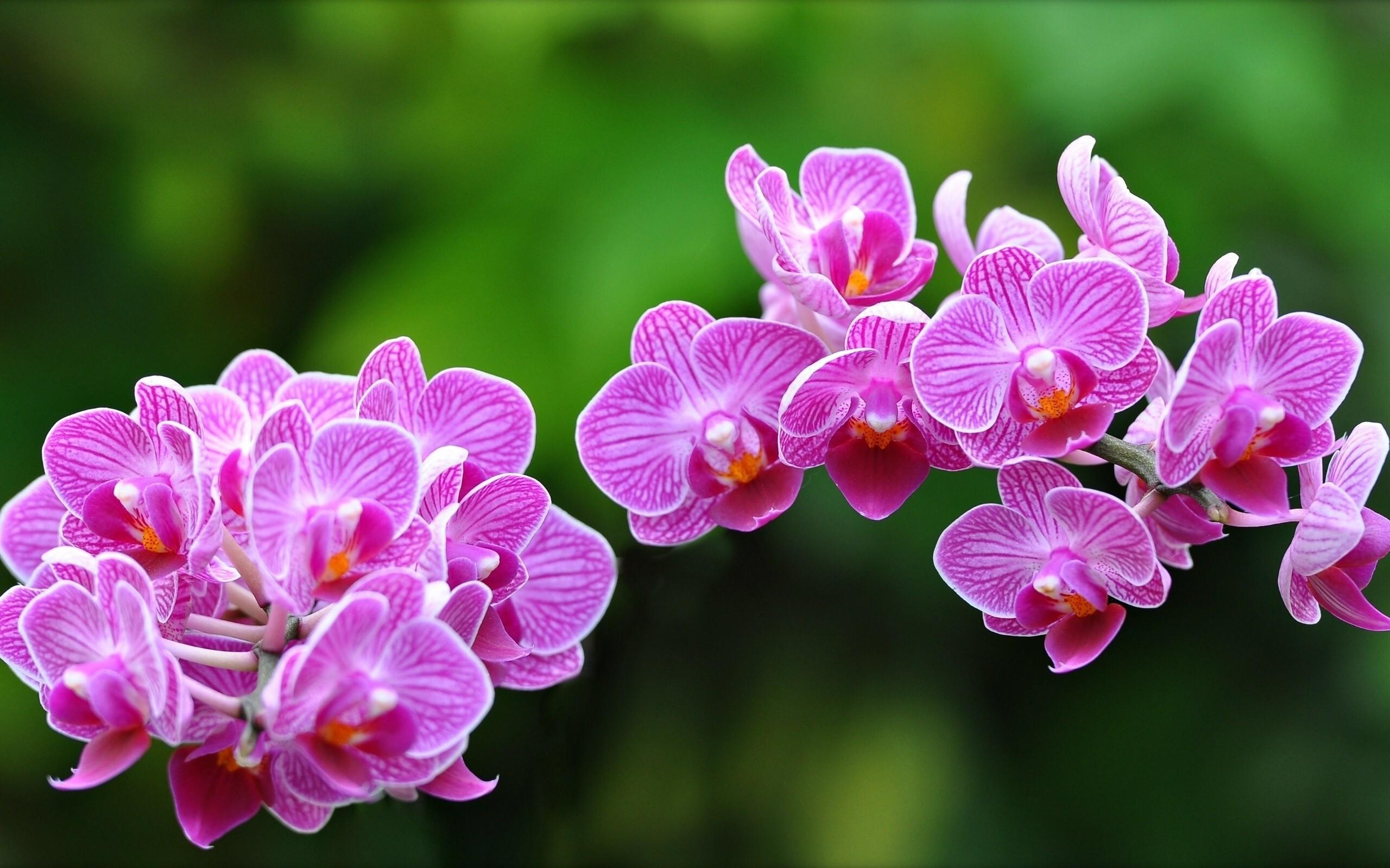 Картинки орхидеи на рабочий стол красивые большие на весь экран, блох прикол