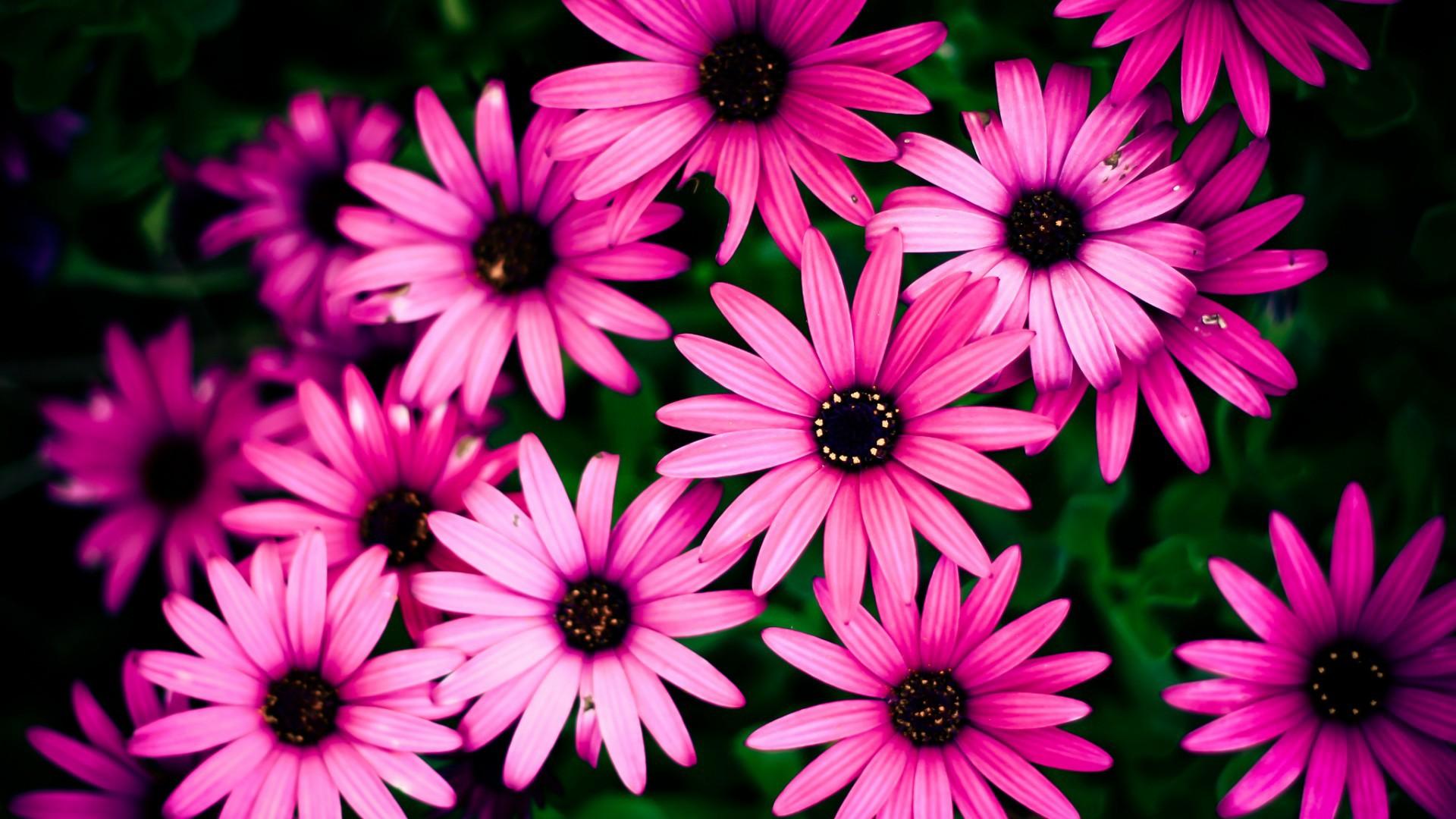 Цветы на розовом фоне картинки