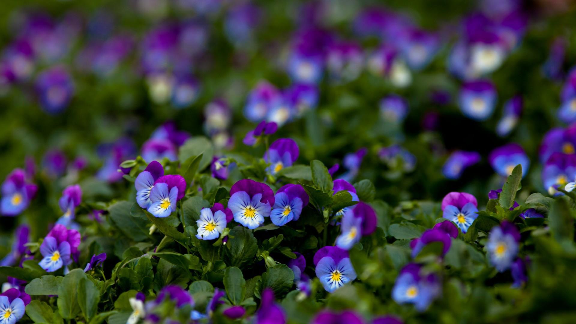 цены картинки на рабочий стол лиловые цветы заявку Характеристика пищевая