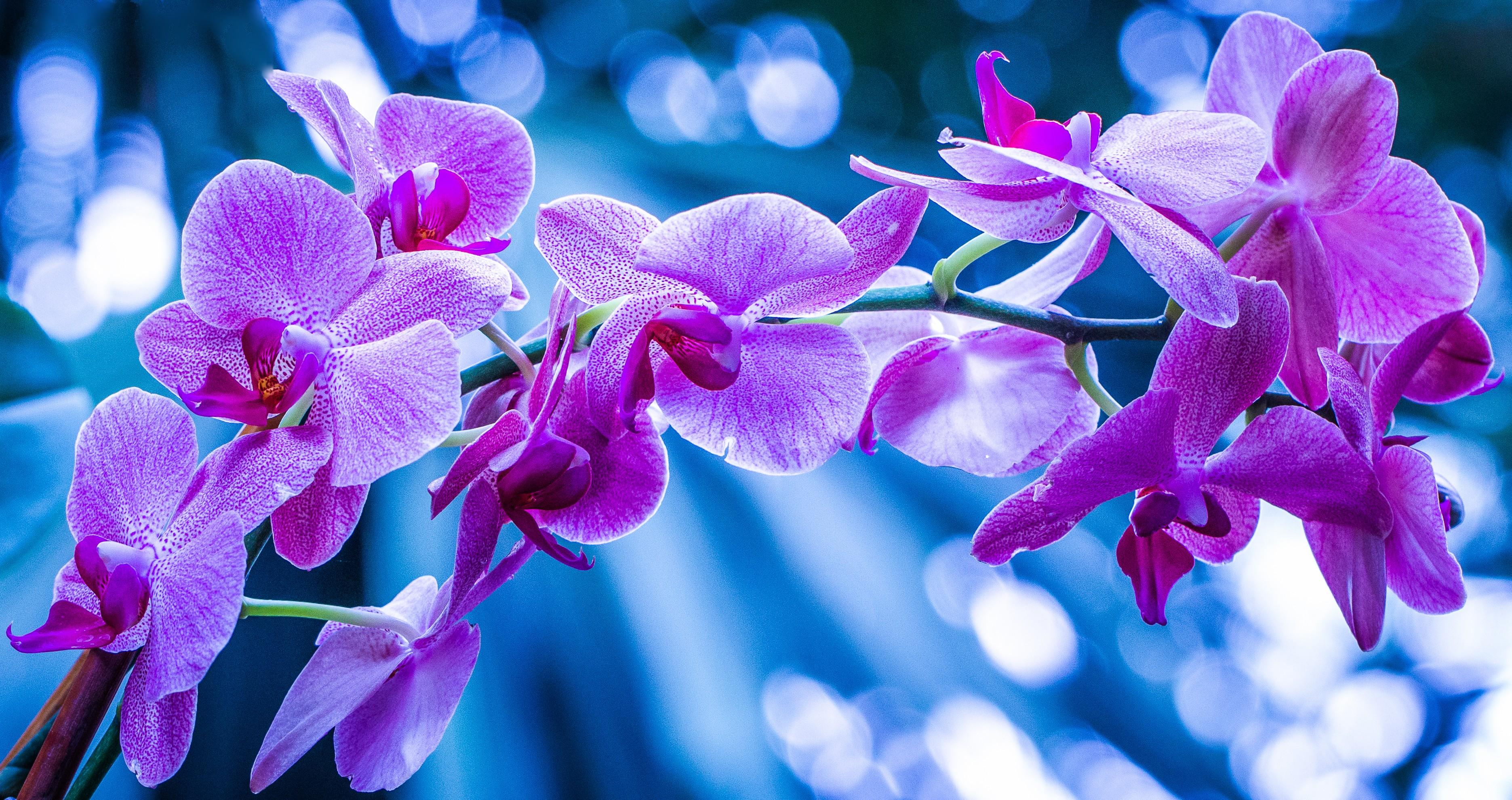 чумы истребляли картинки для рабочего стола цветы орхидеи это смесь мелко