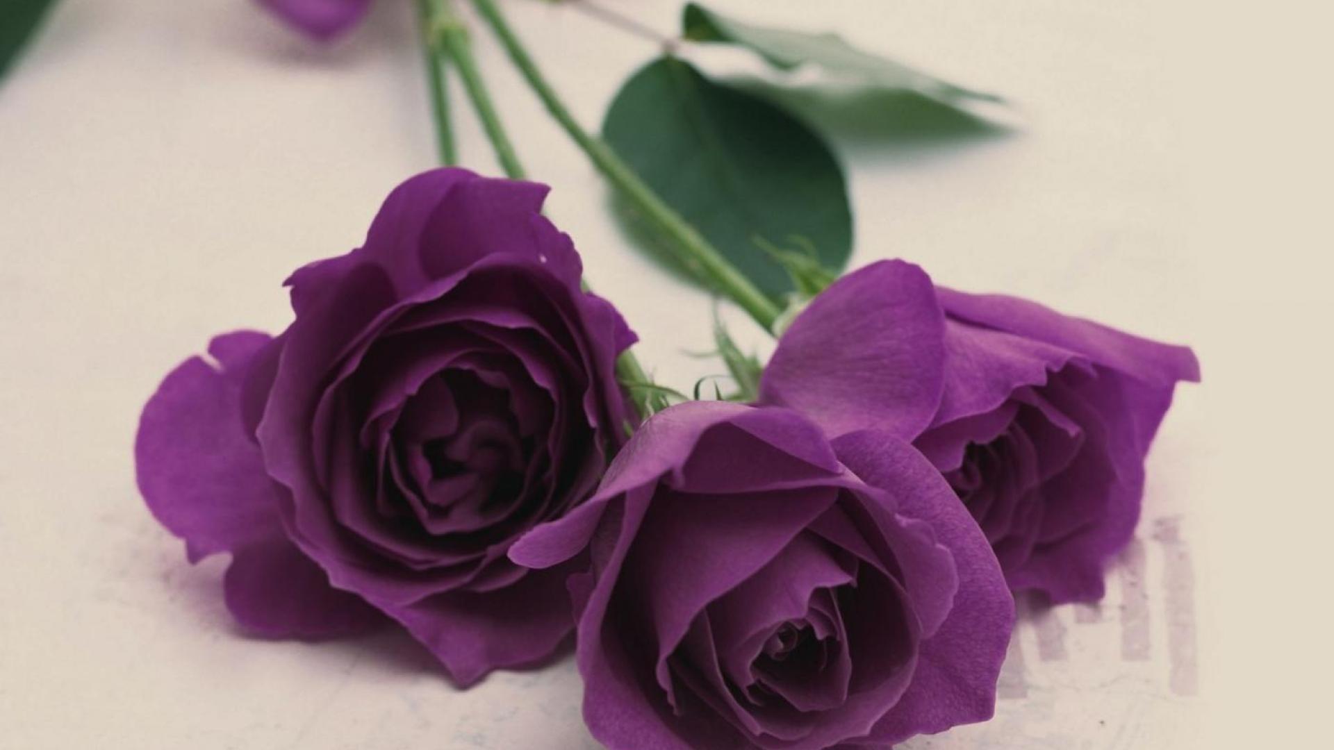 Курица, маленькие розы картинки фиолетовый фон
