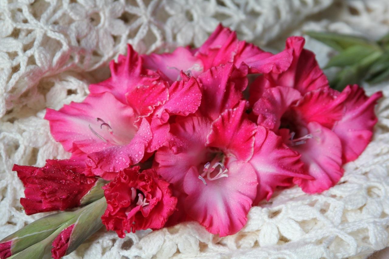 Море горы, цветы гладиолусы картинки на рабочий стол