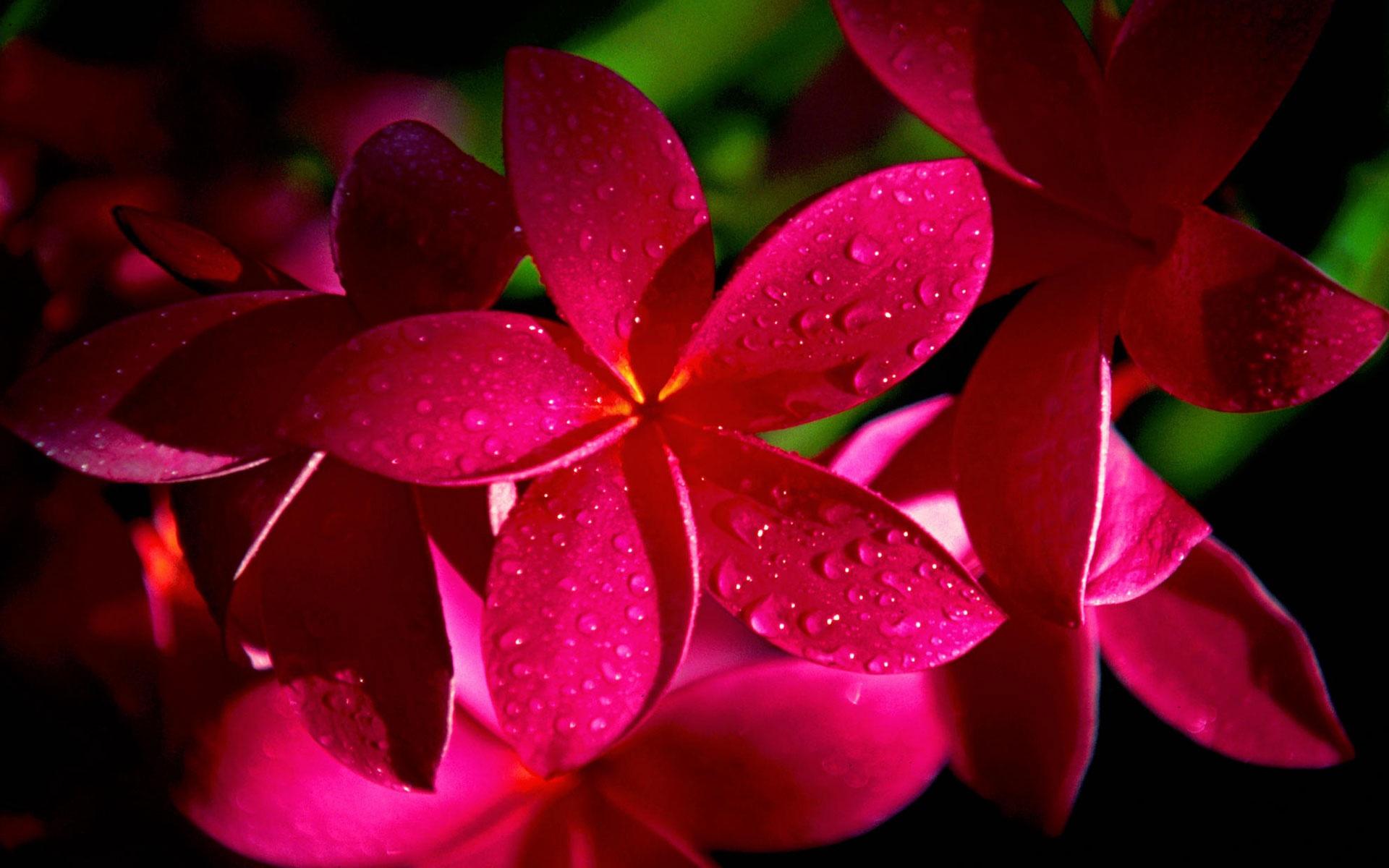 Красные цветы фото hd