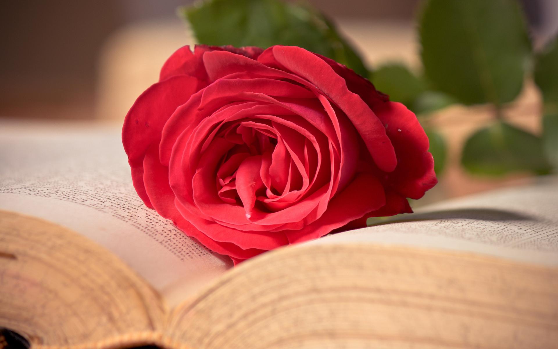 Ты прекрасна как роза открытка