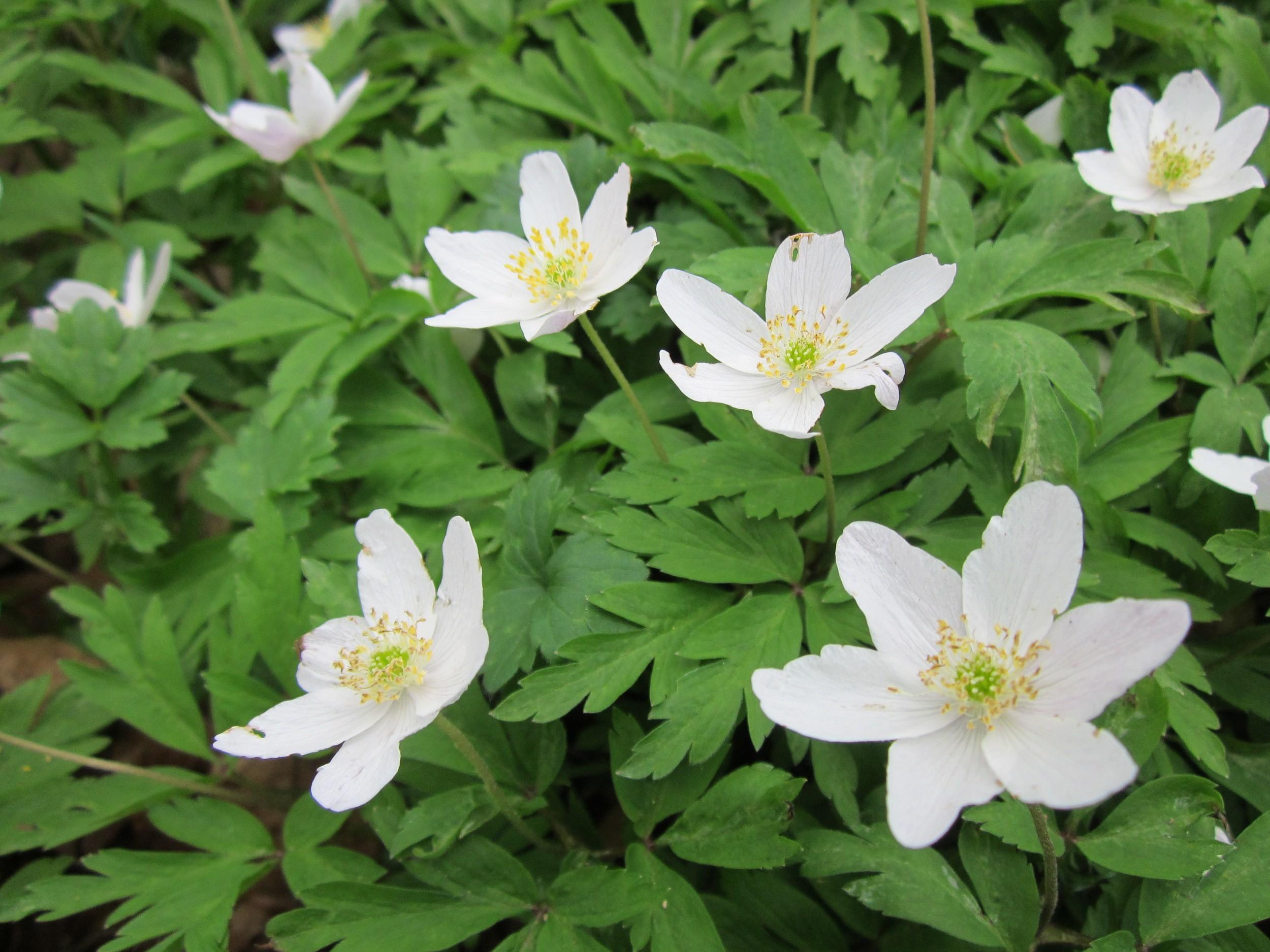 Фото садовых цветов с белыми цветами
