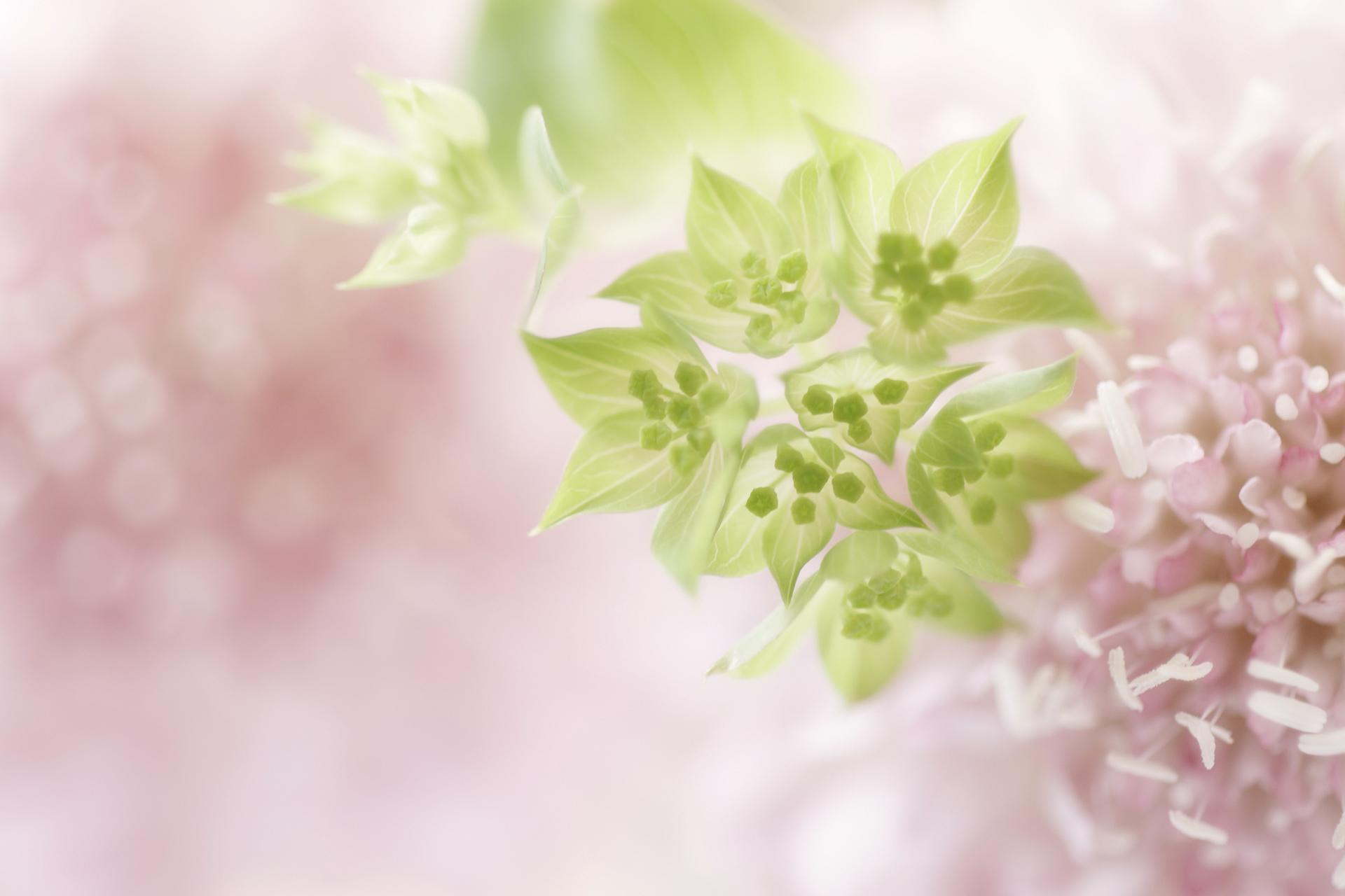 нежные цветы обои на презентацию может быть речи