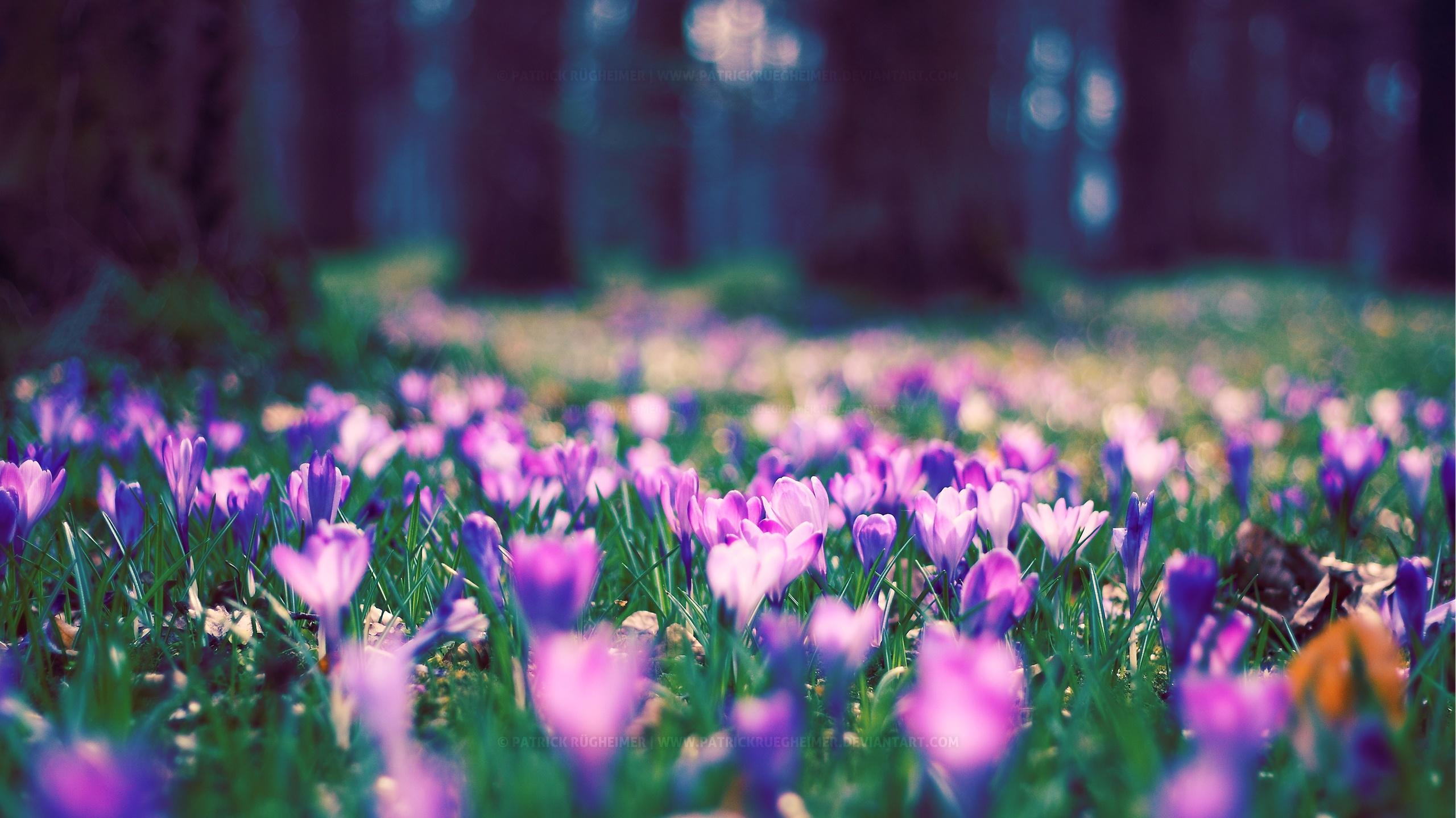 картинки для фона в компьютере весна себя канале