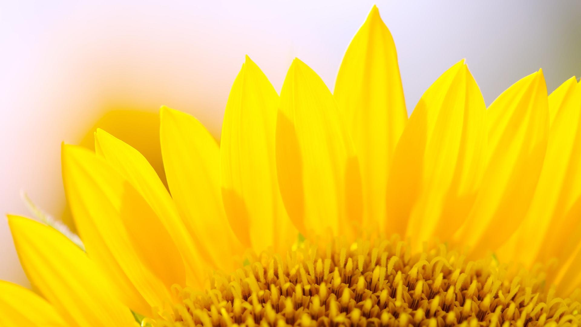 sunflower recipe card template .