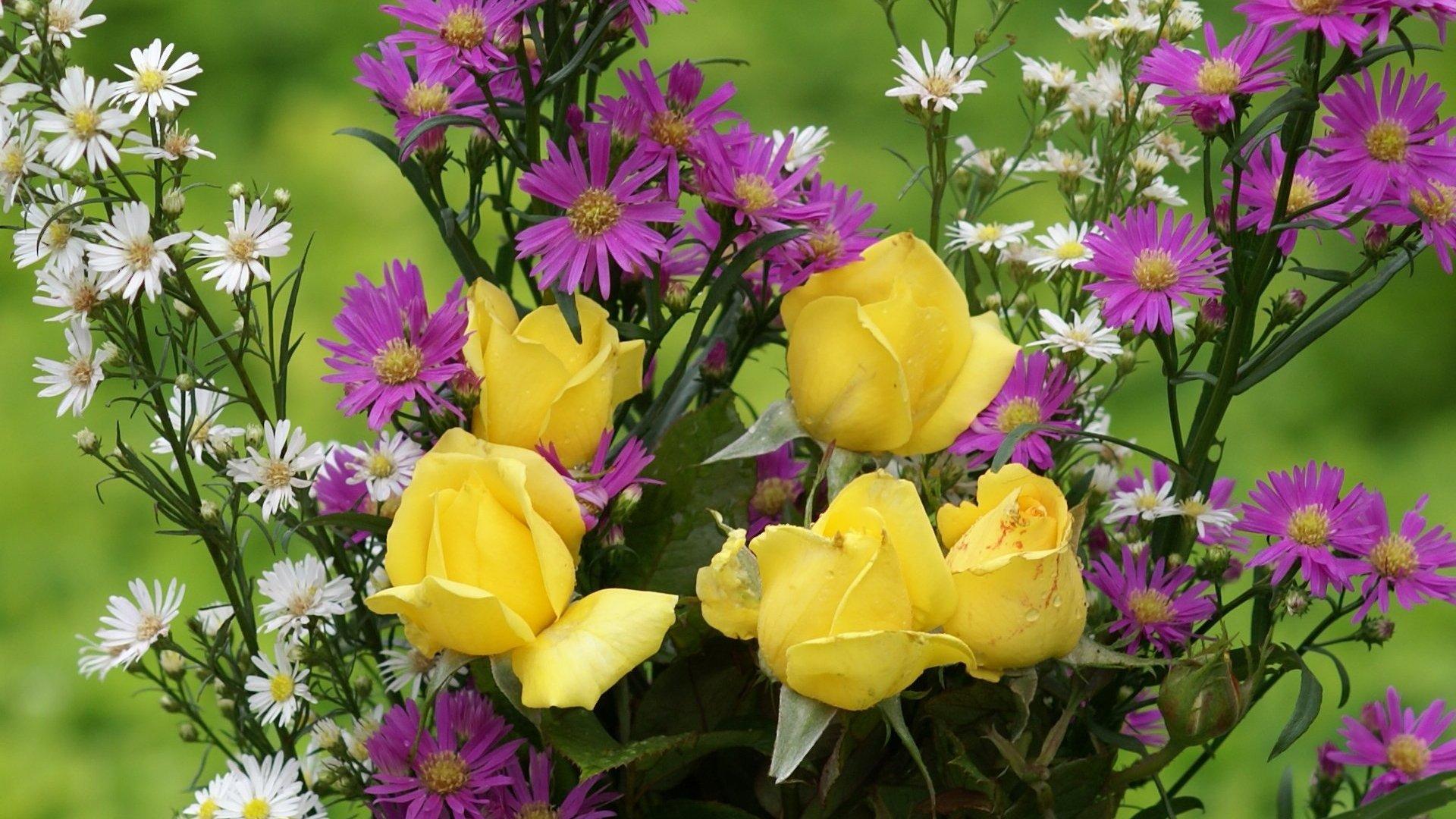Картинки цветы садовые полевые на телефон обои