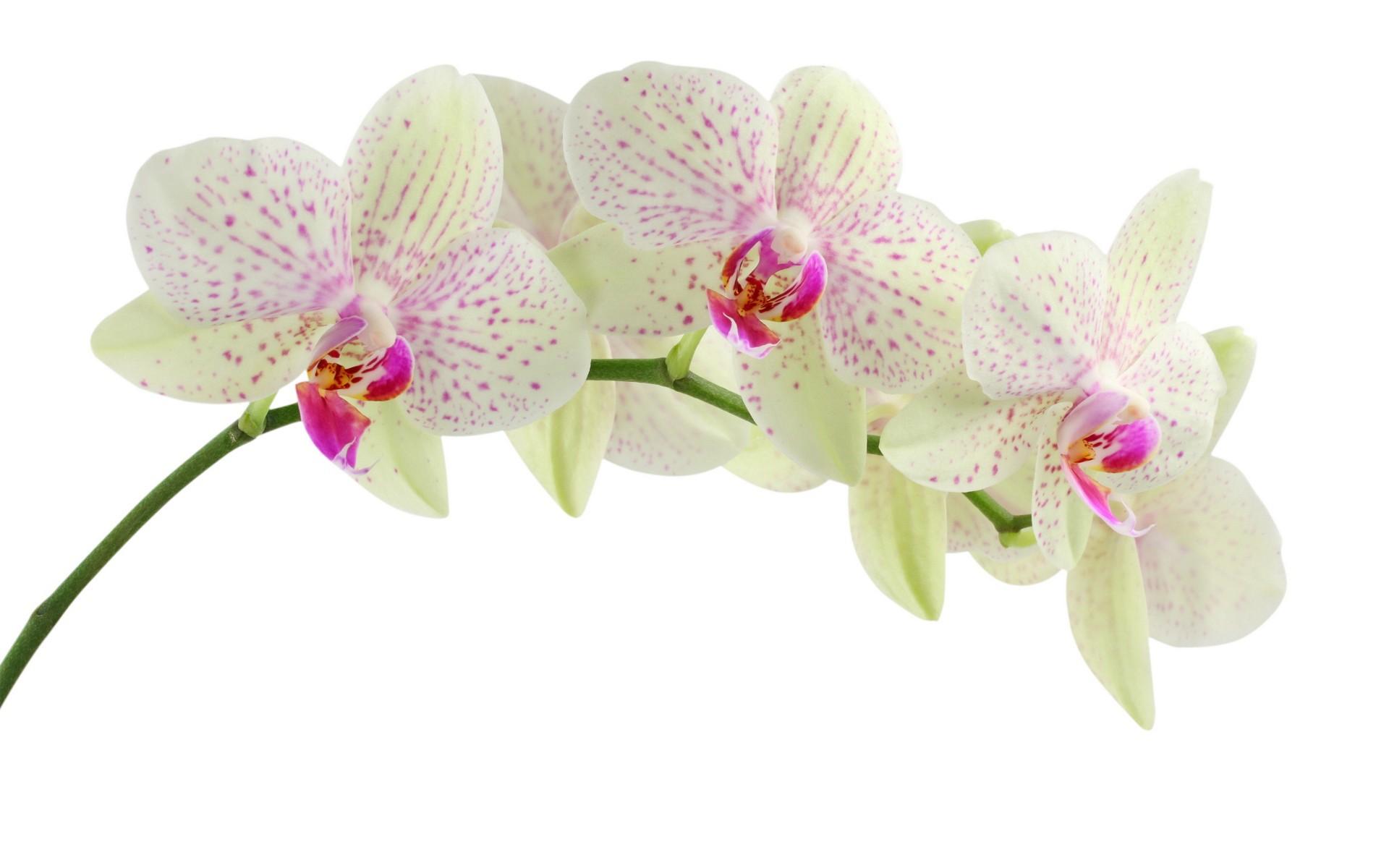 Картинки цветы белый фон