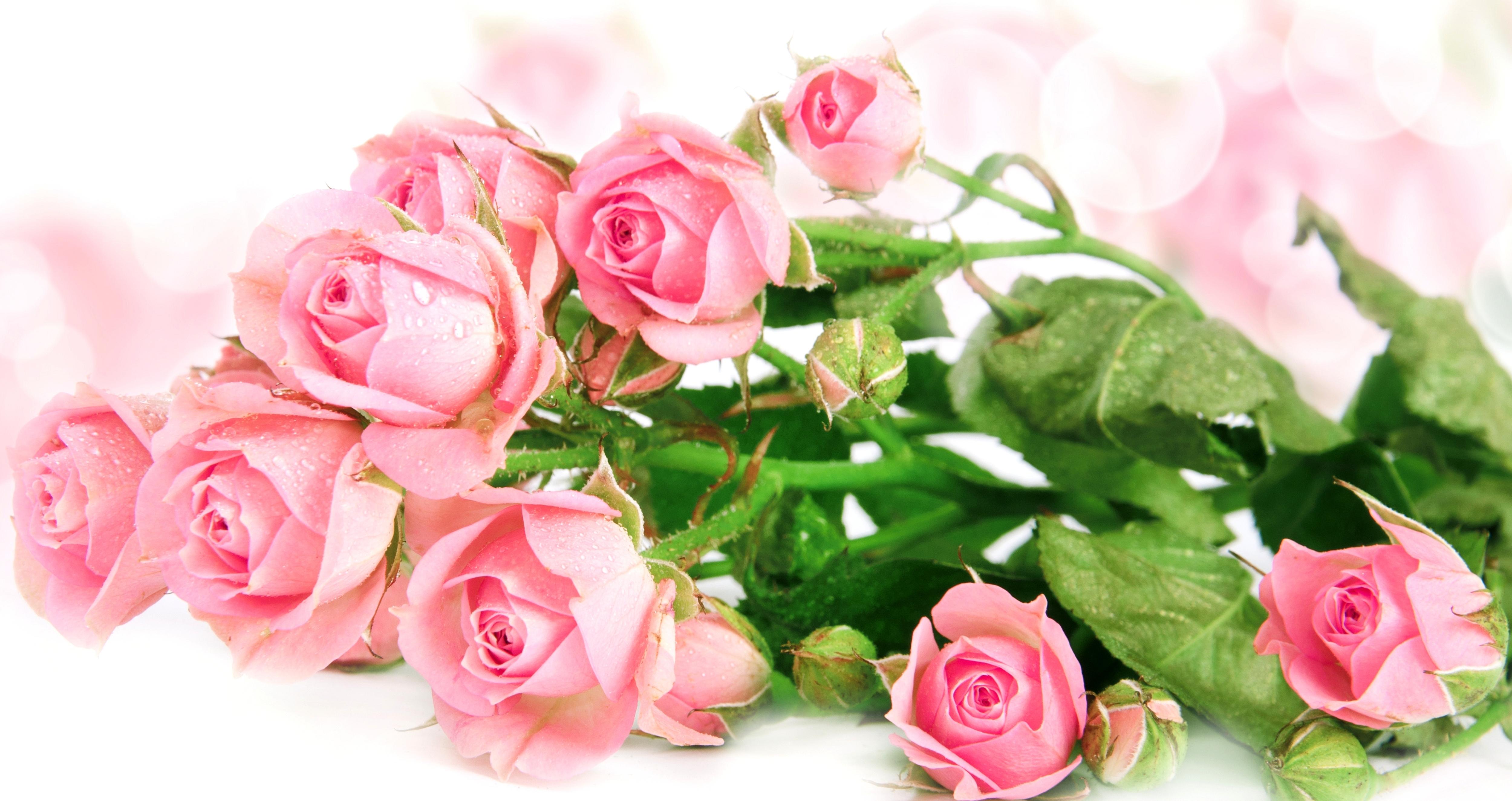 Открытки розы для, погибшим
