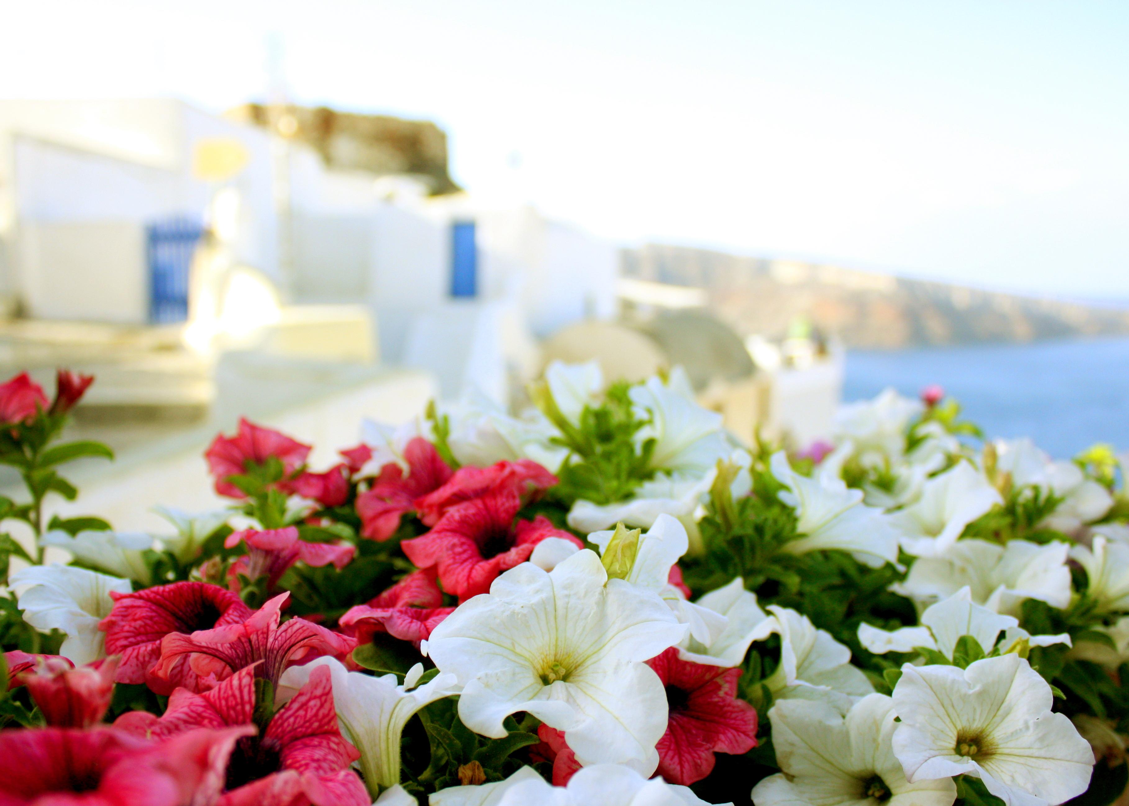Весна в Греции. Цветы.