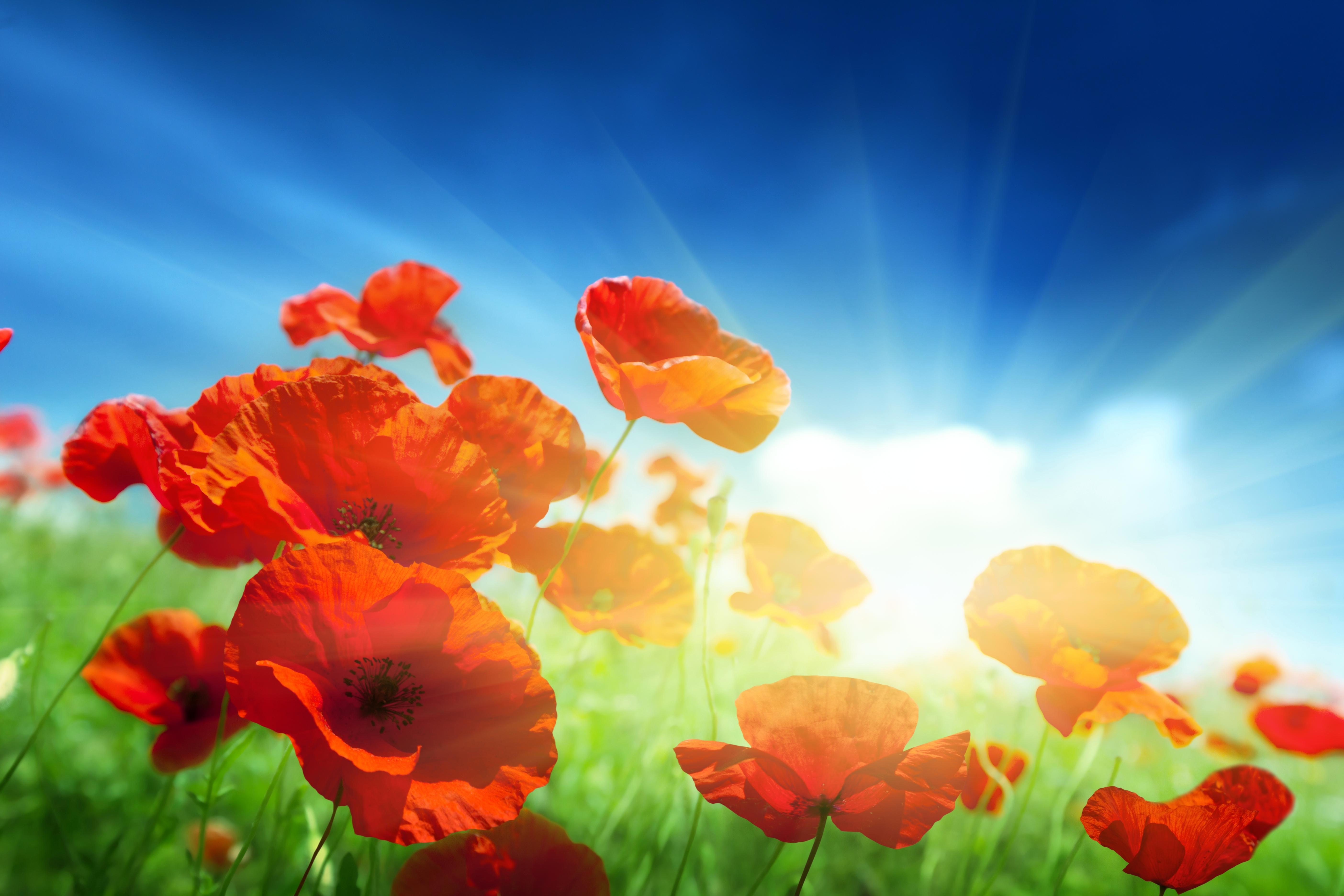 Про, картинки цветы на фоне неба