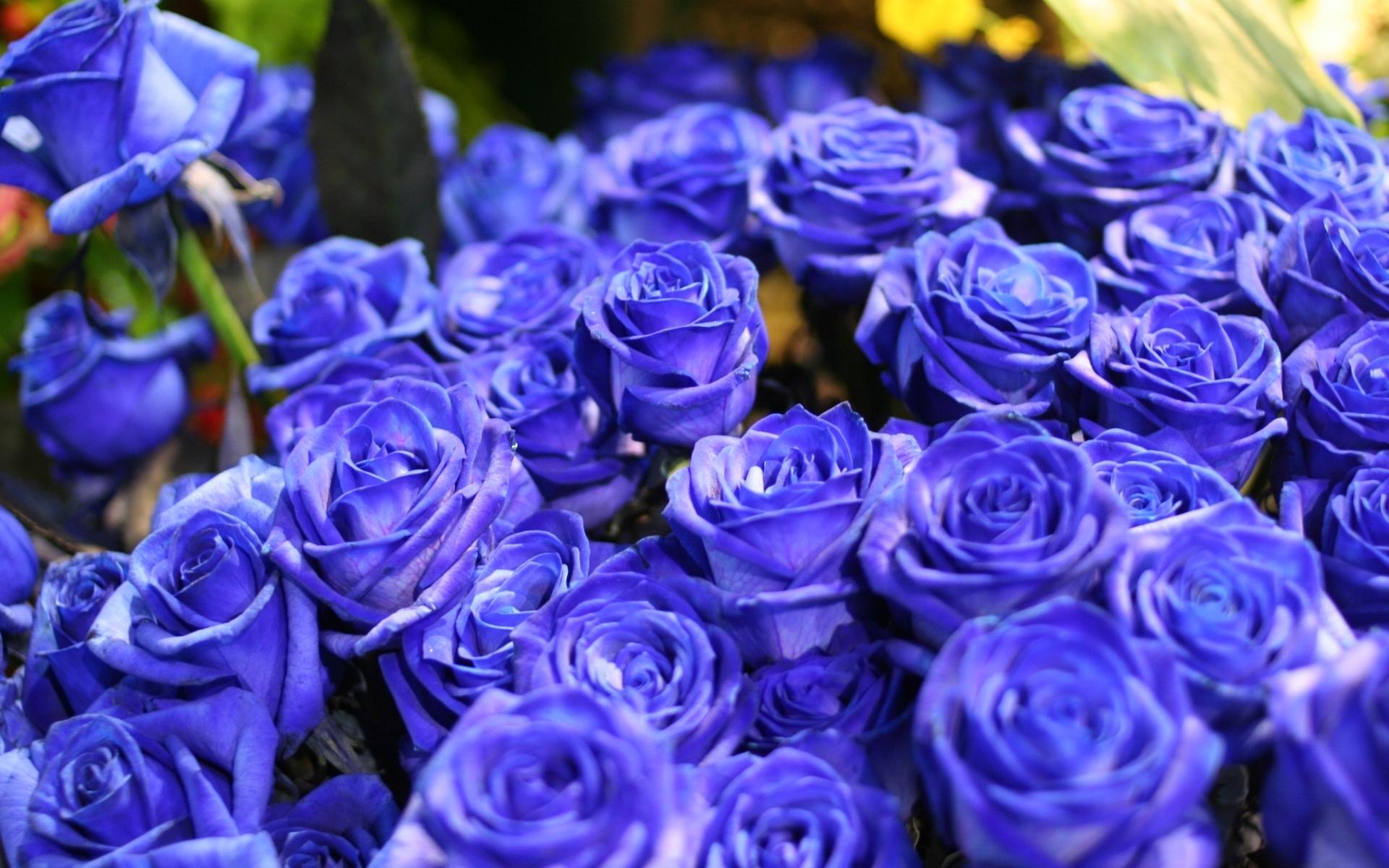 Весенние цветы Названия и фото