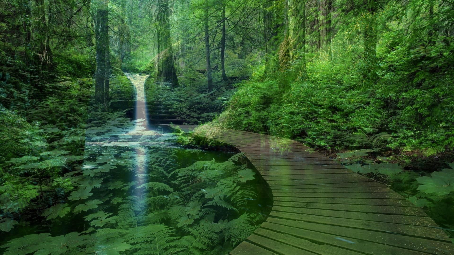 него настройках живые обои лес картинки на рабочий стол небольшие листики острой
