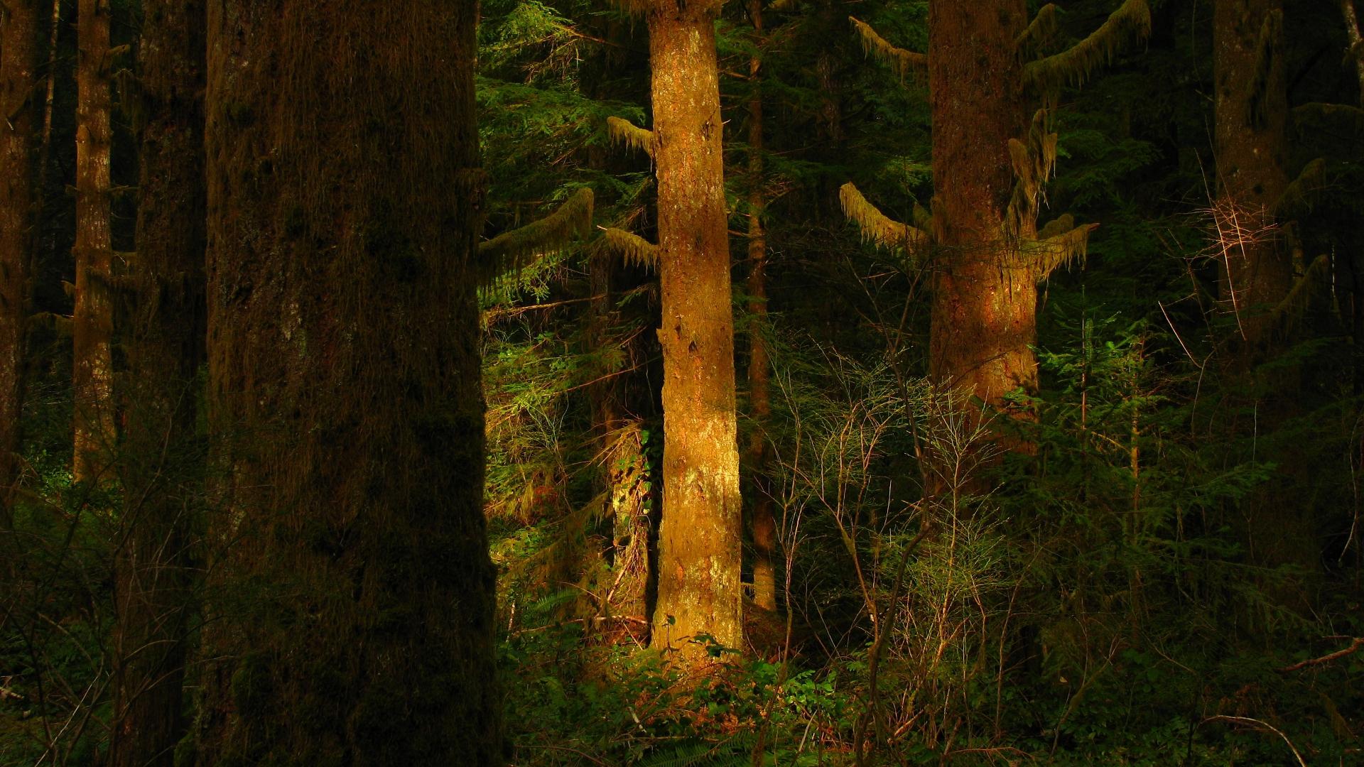 Непроходимые леса в картинках