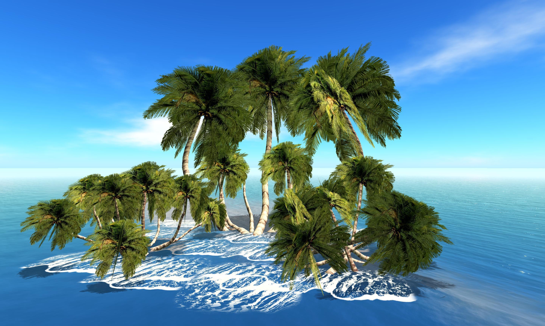 это фото пальмы высокого качества русские