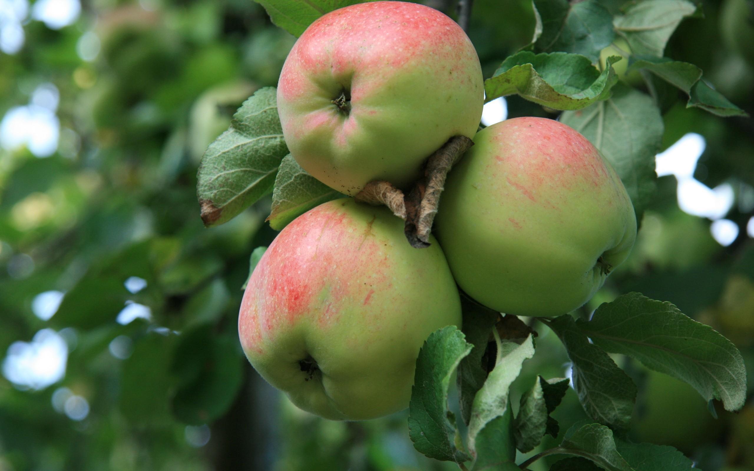 К яблоки снятся на ветках чему