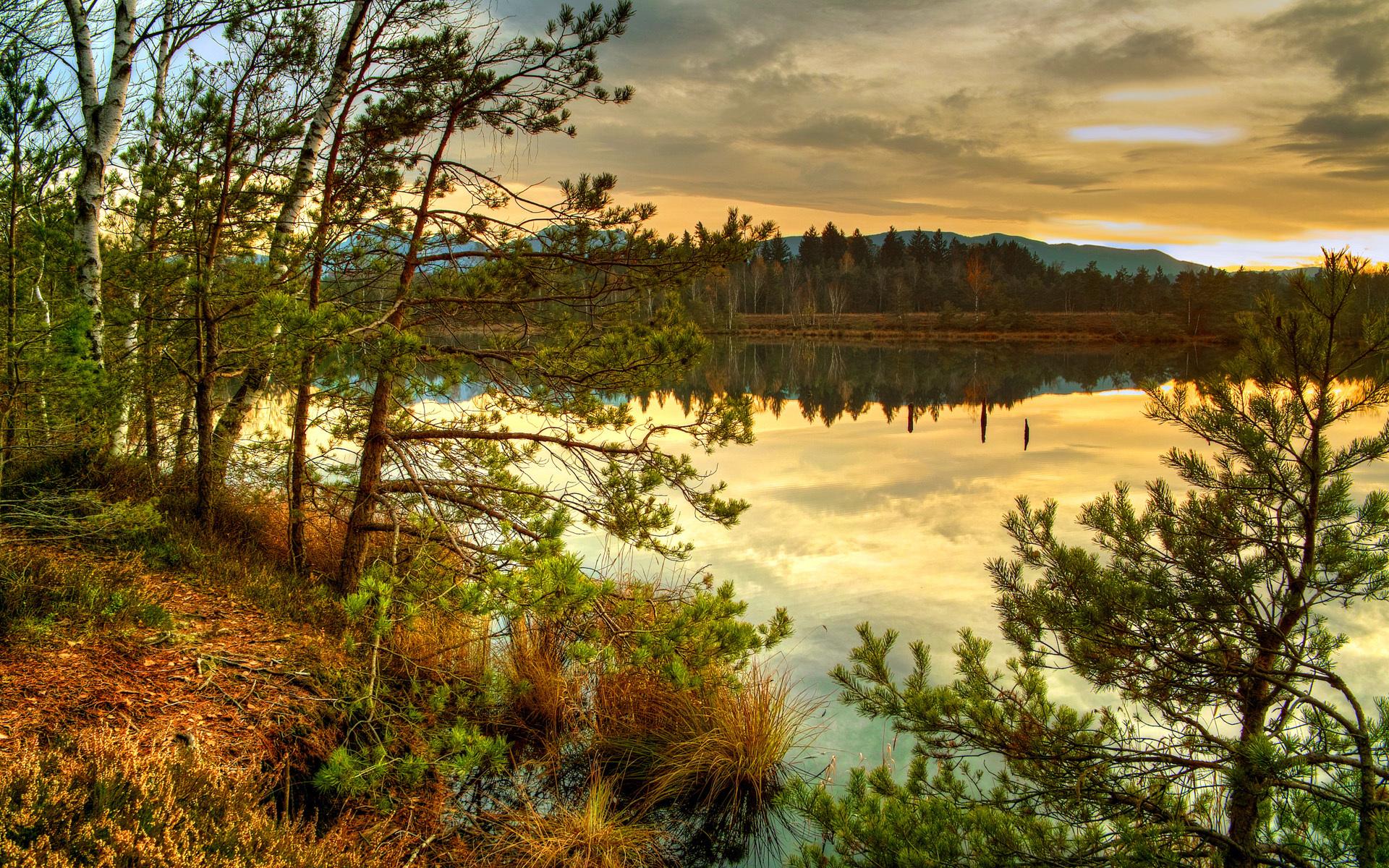 лесные пейзажи фото высокого разрешения это нарушение