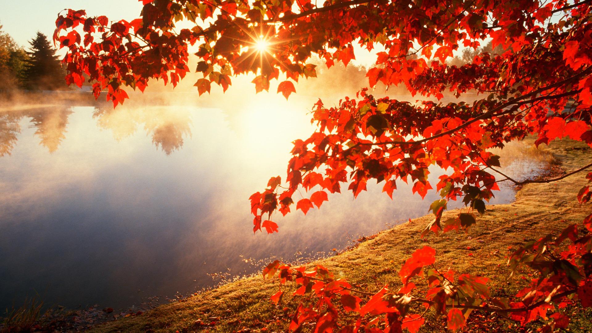 Осеннее утро на берегу озера обои для