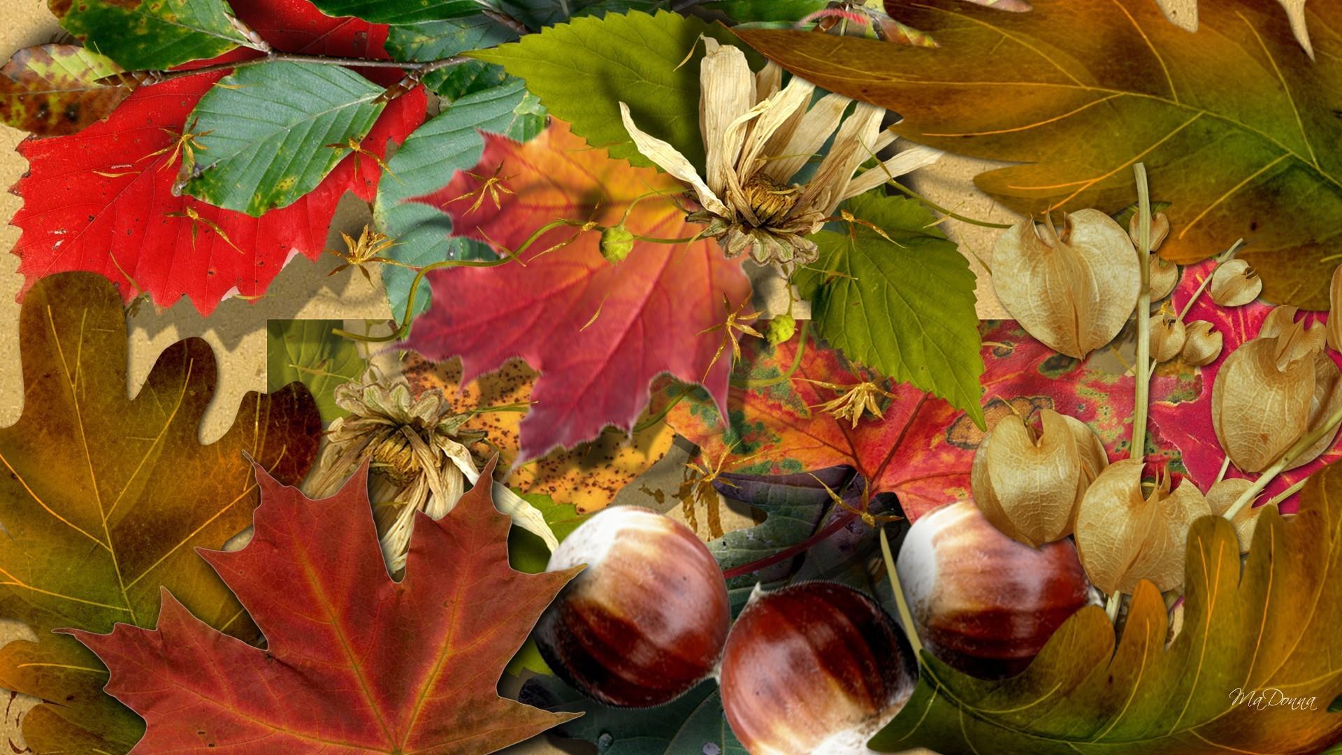 Осень картинки креатив название