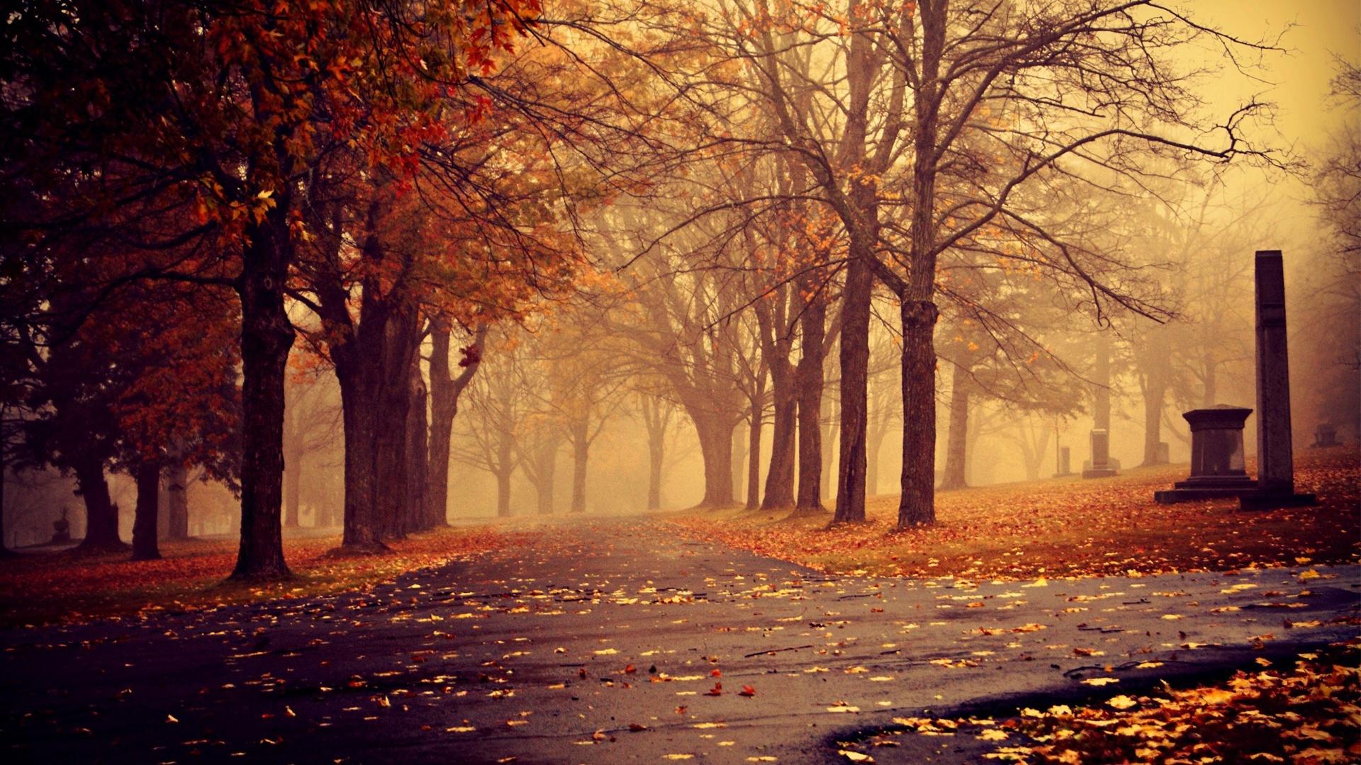 Autumn City Park By
