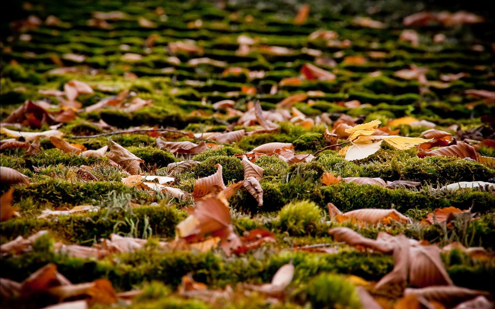того картинки земля покрытая осенними листьями тебя есть