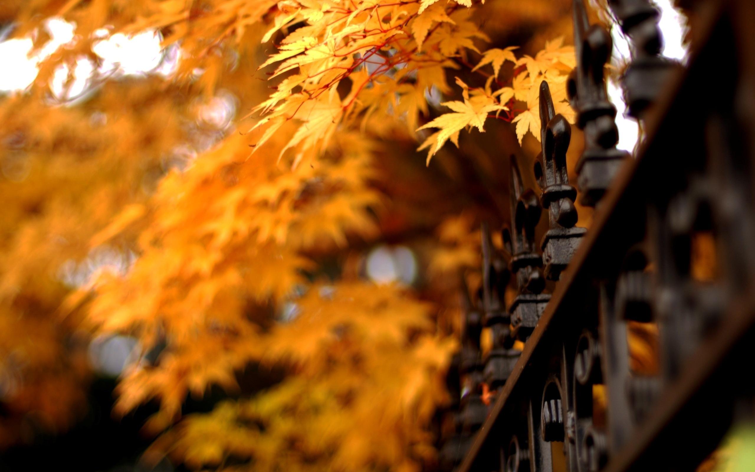 wallpaper iron fence - photo #31