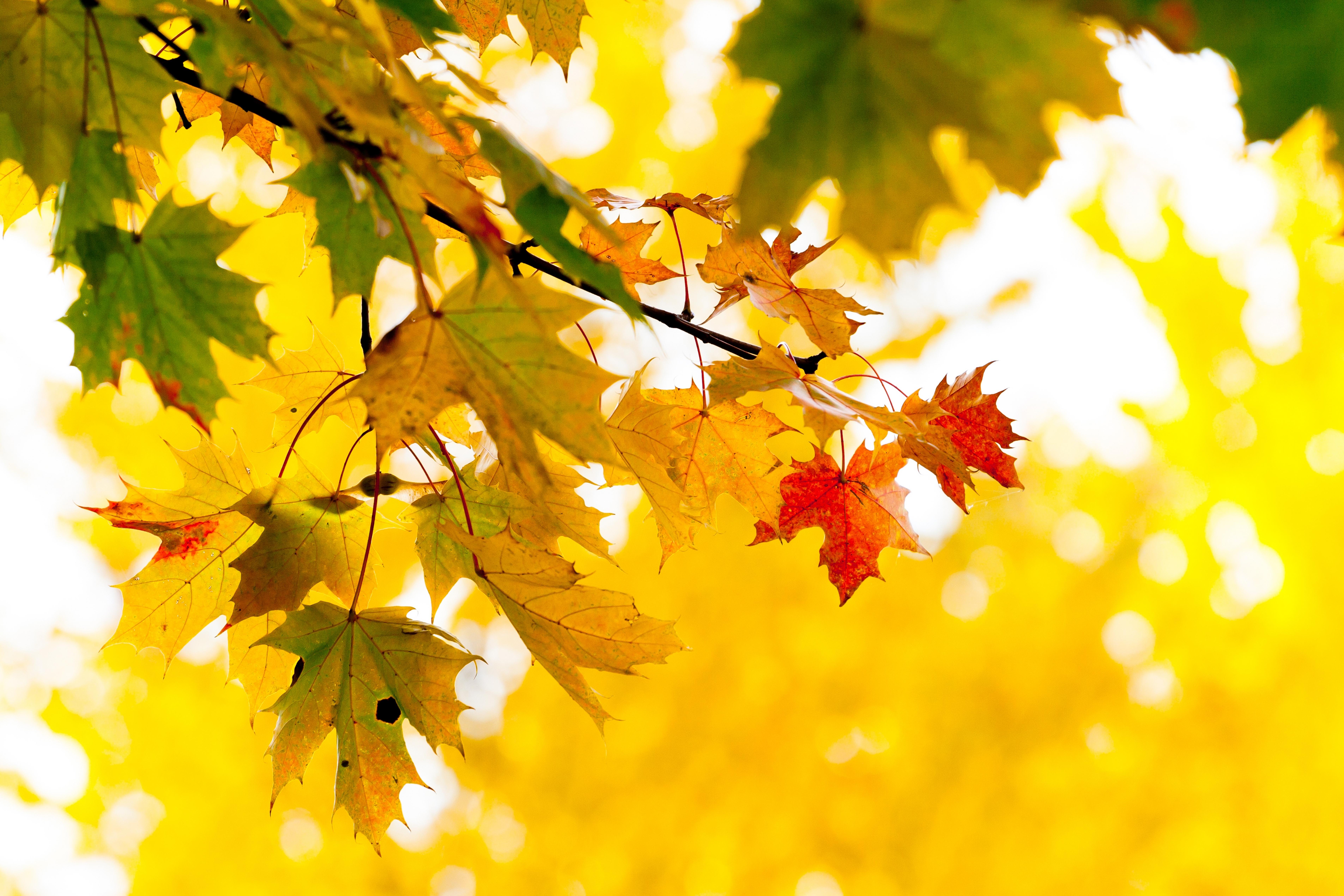 Картинки фон рабочего стола осень, погоды картинках