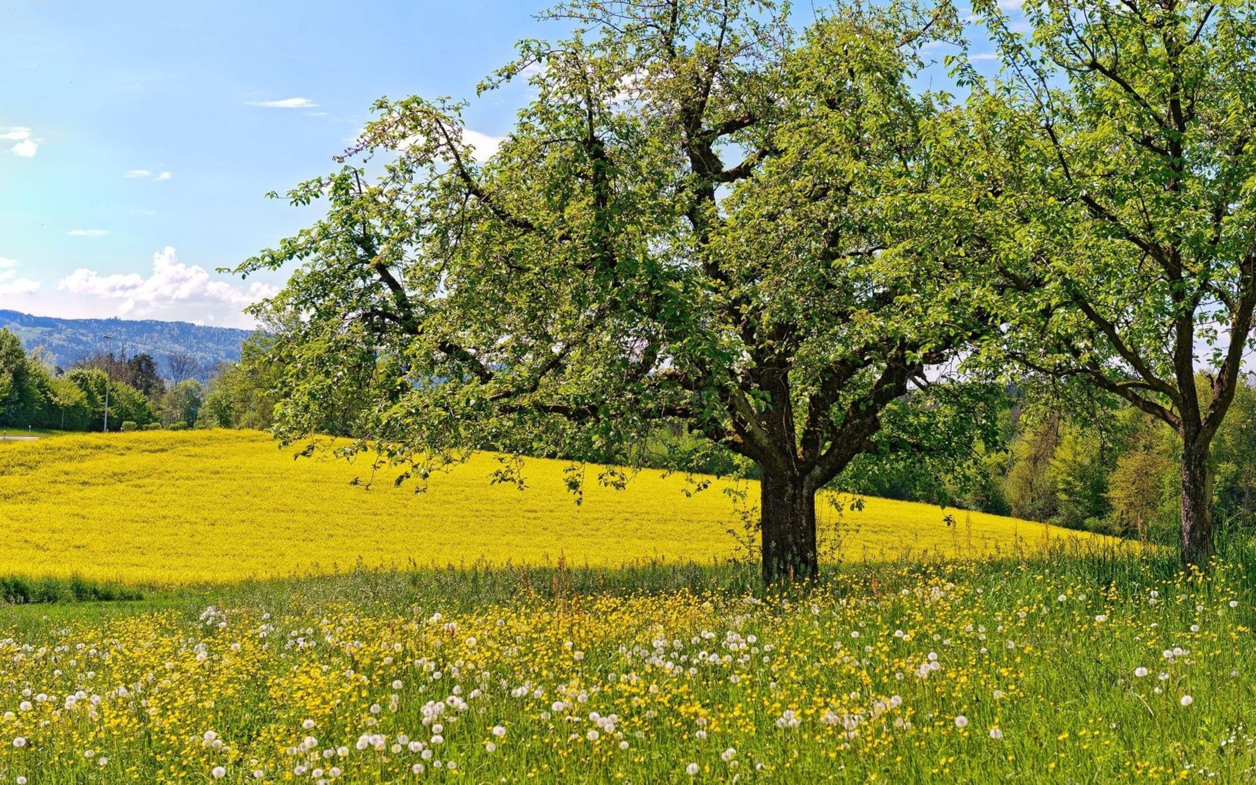 beautiful spring trees wallpaper - photo #2