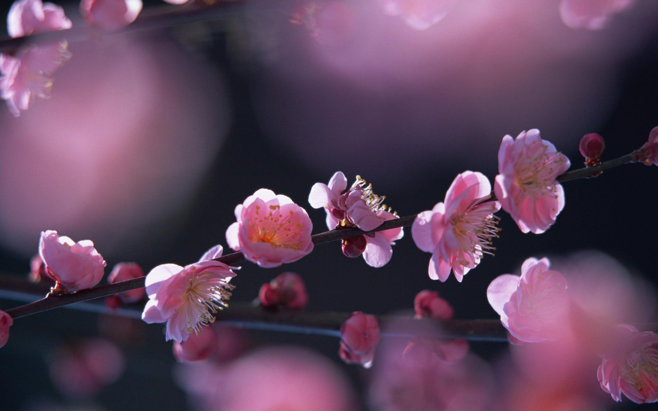 Картинки для рабочего стола весна на весь экран природа, удалить текст открытки