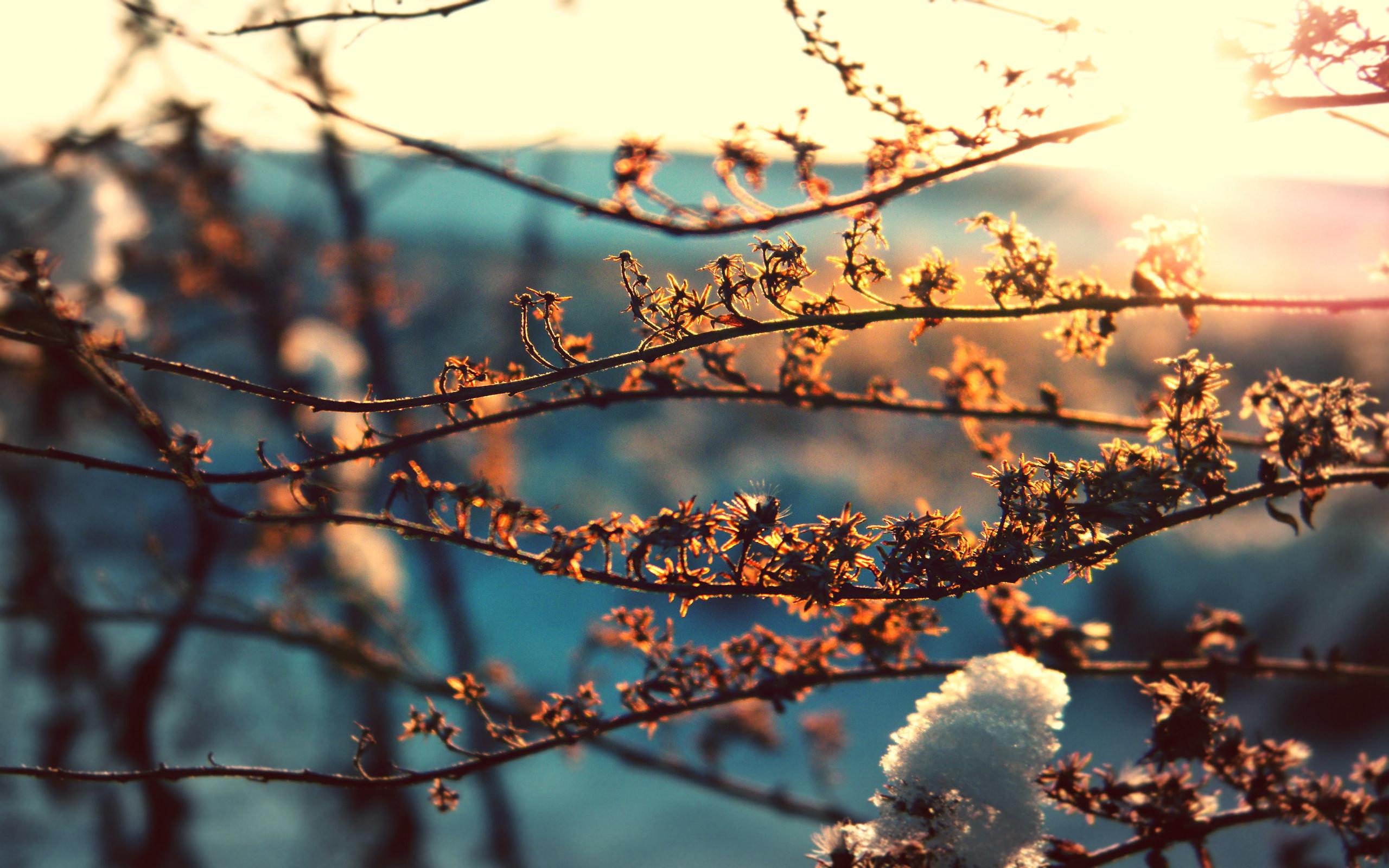 Марта вторая, картинки снежное утро весной