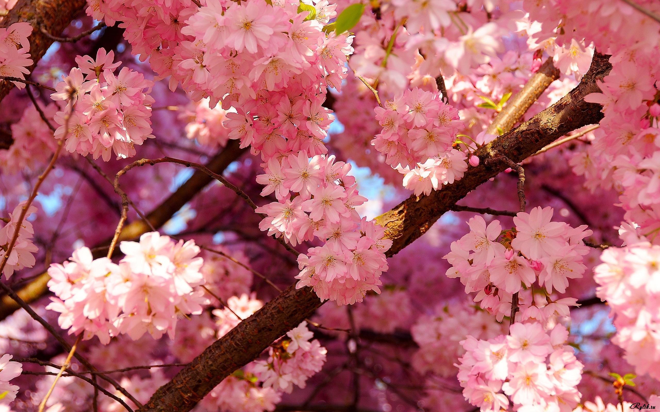 Картинки, фото весны на телефон