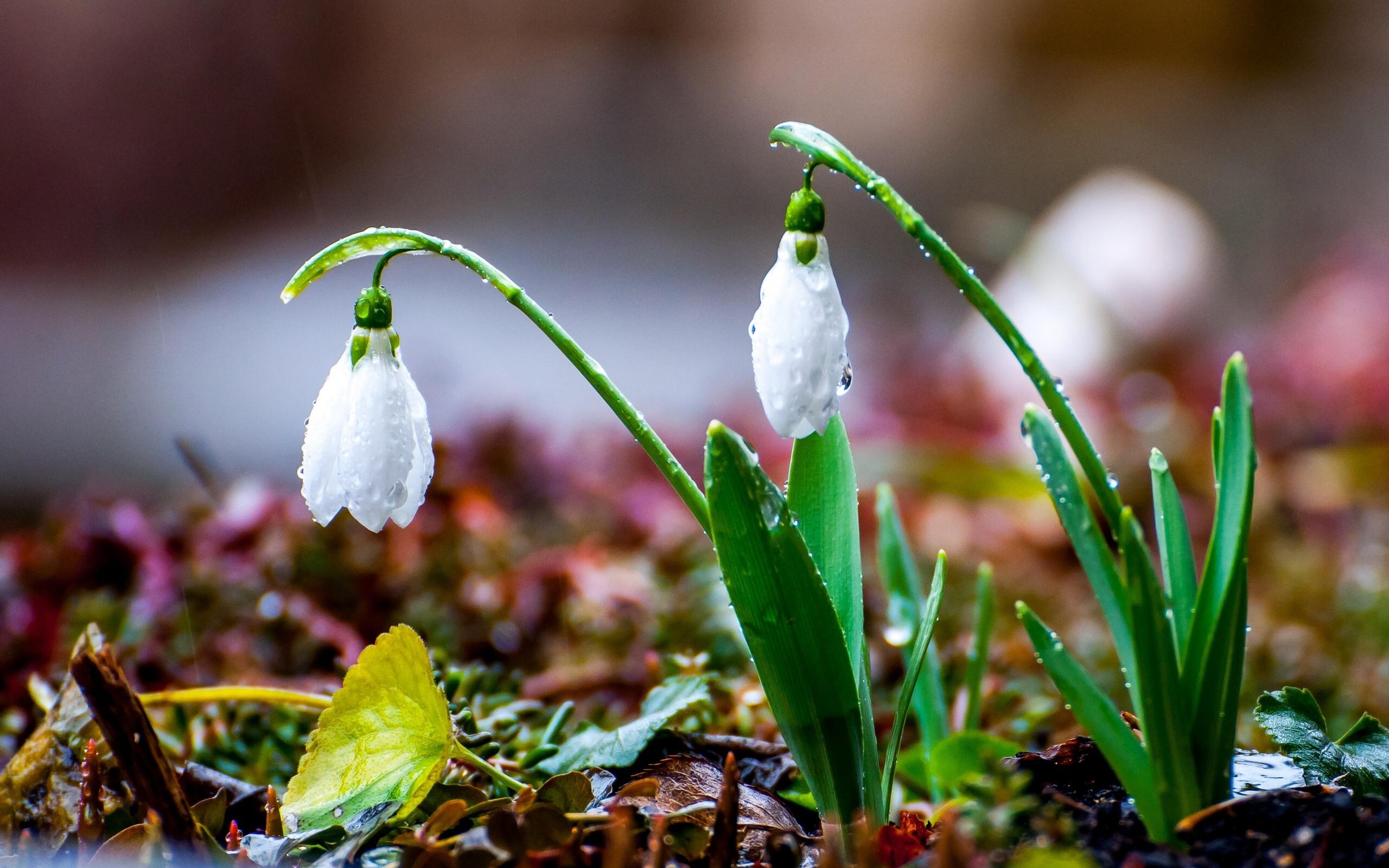 Запах весны фото выбрать