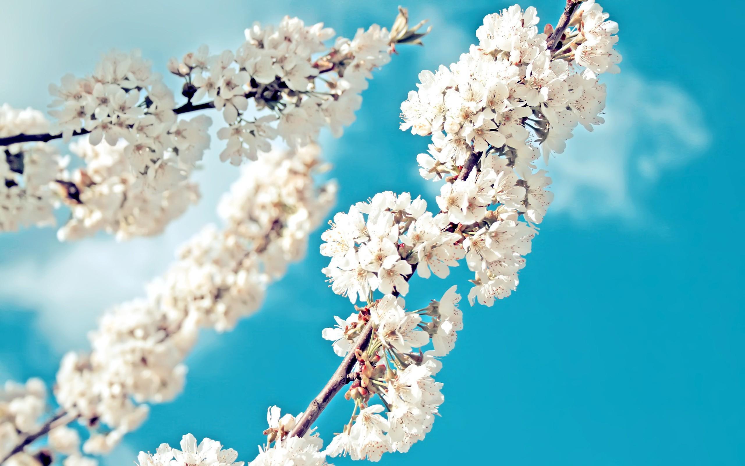 Картинки весна в душе на рабочий стол красивые