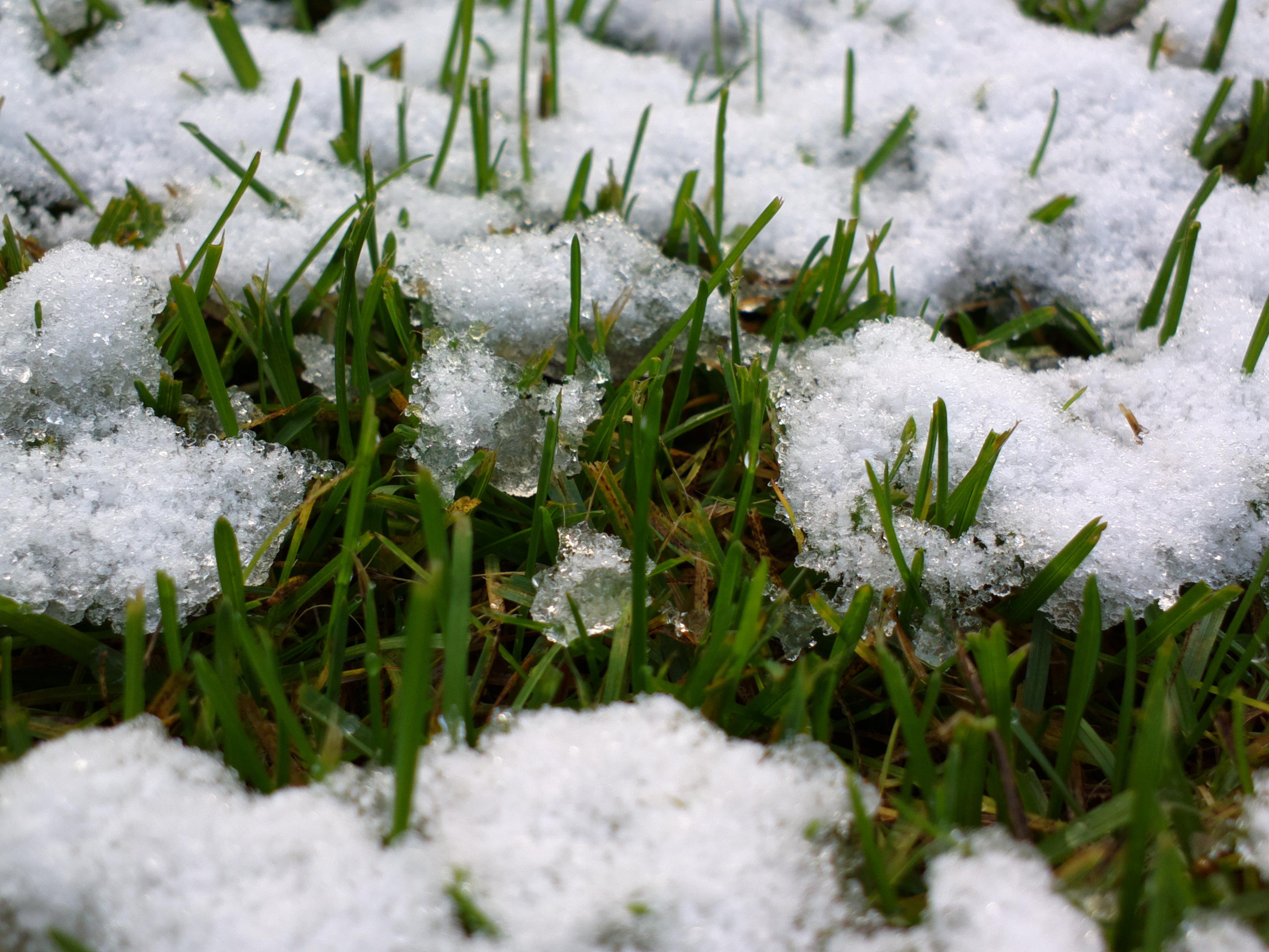 Картинка с травой весной, праздников казахстана поздравительные