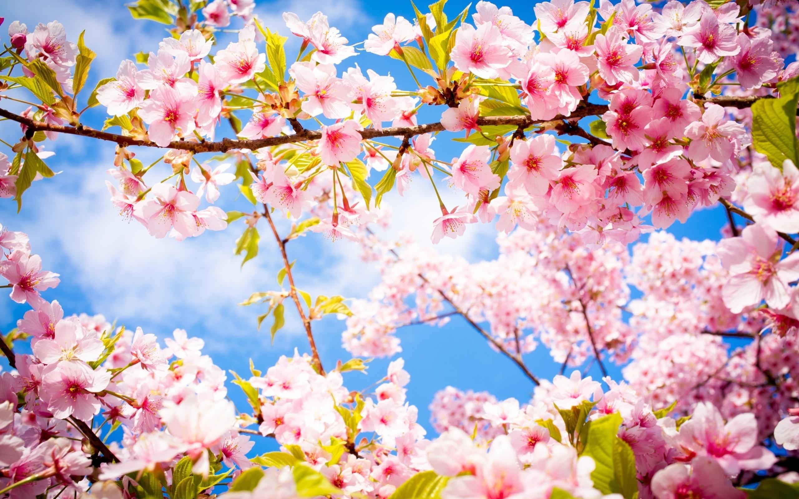 Beautiful spring flowering forest wallpapers and images wallpapers beautiful spring flowering forest wallpapers and images wallpapers pictures photos izmirmasajfo
