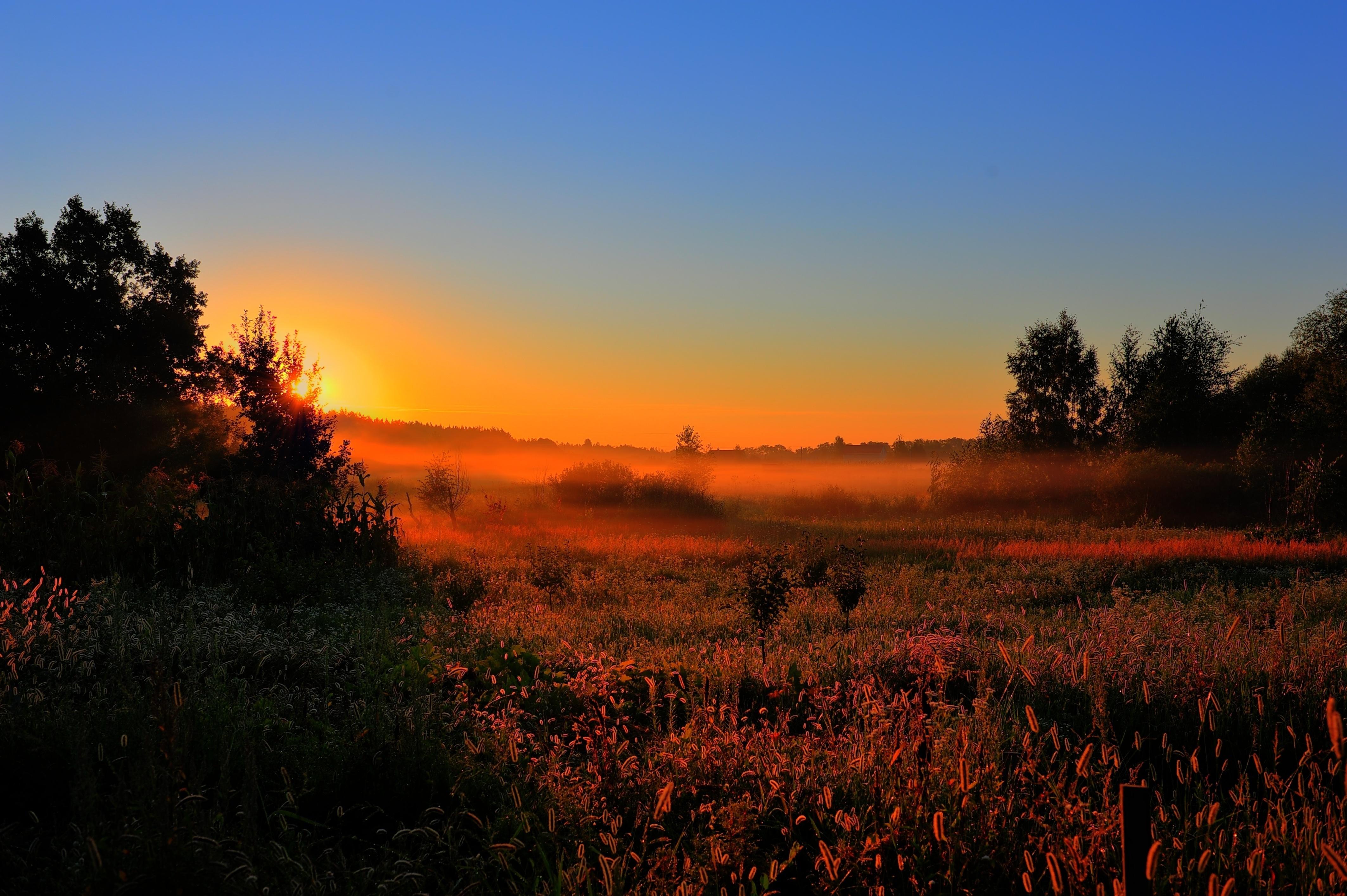 фото туман лето