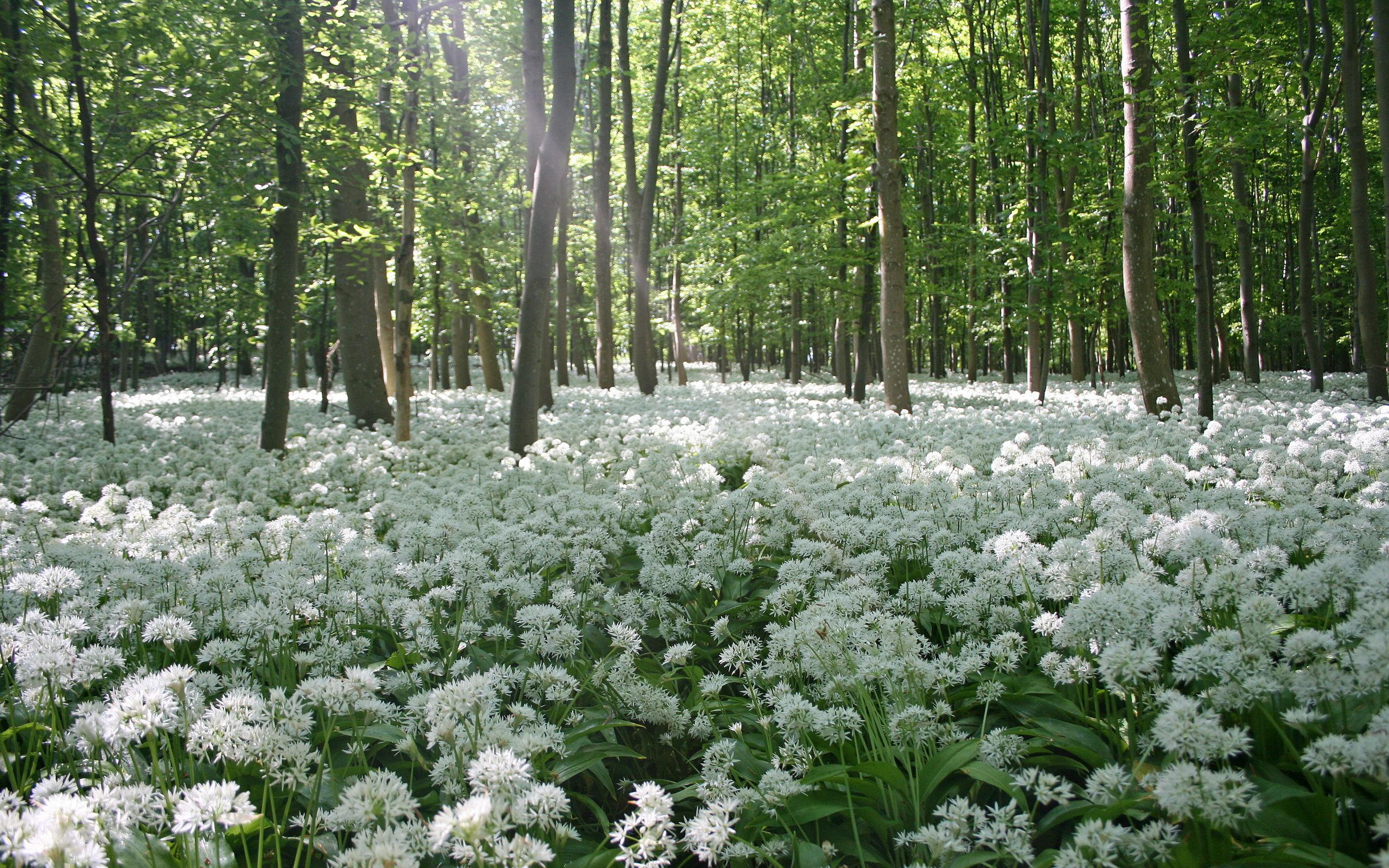 весна фотообои:
