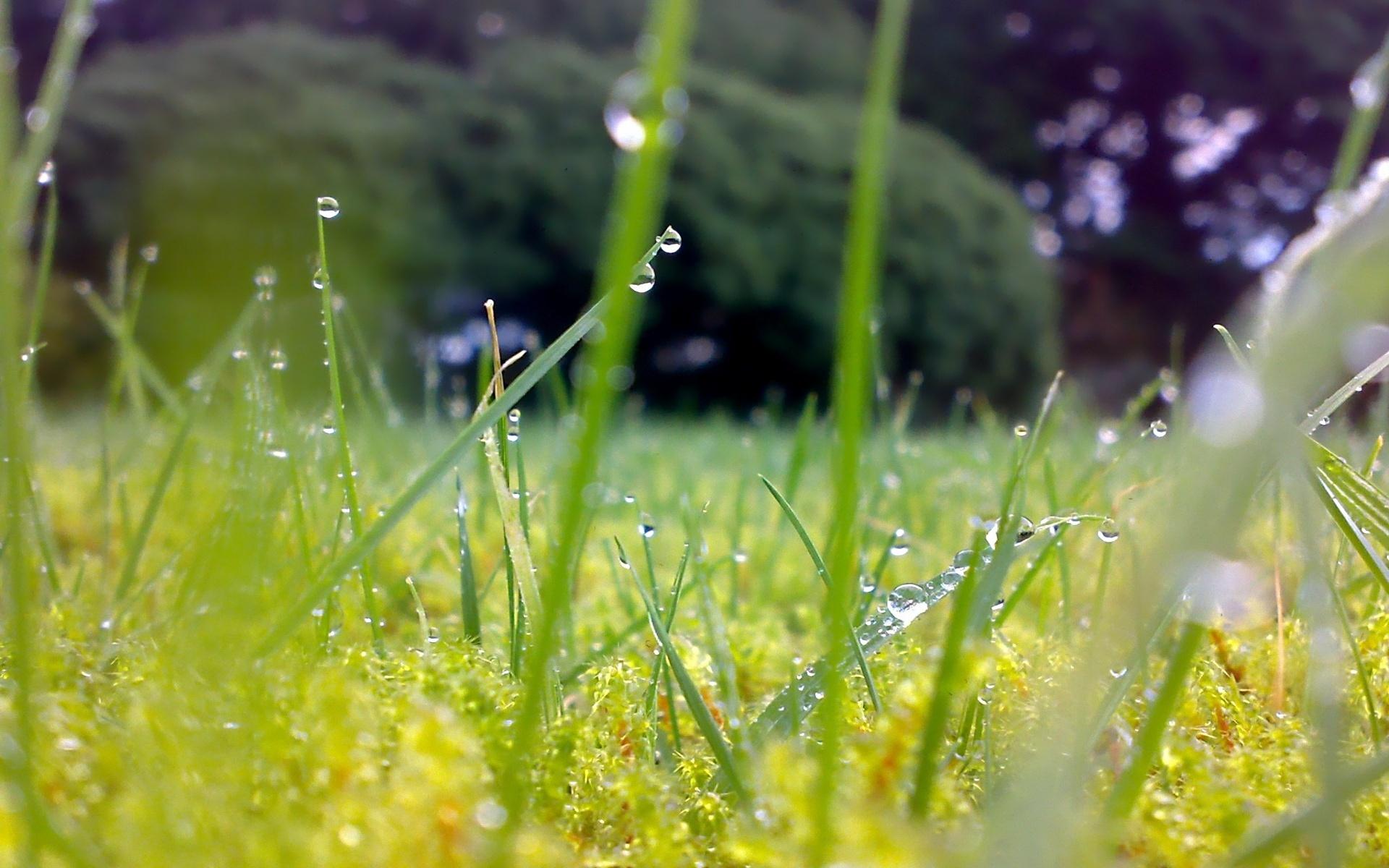 картинка летний дождь утро оклад