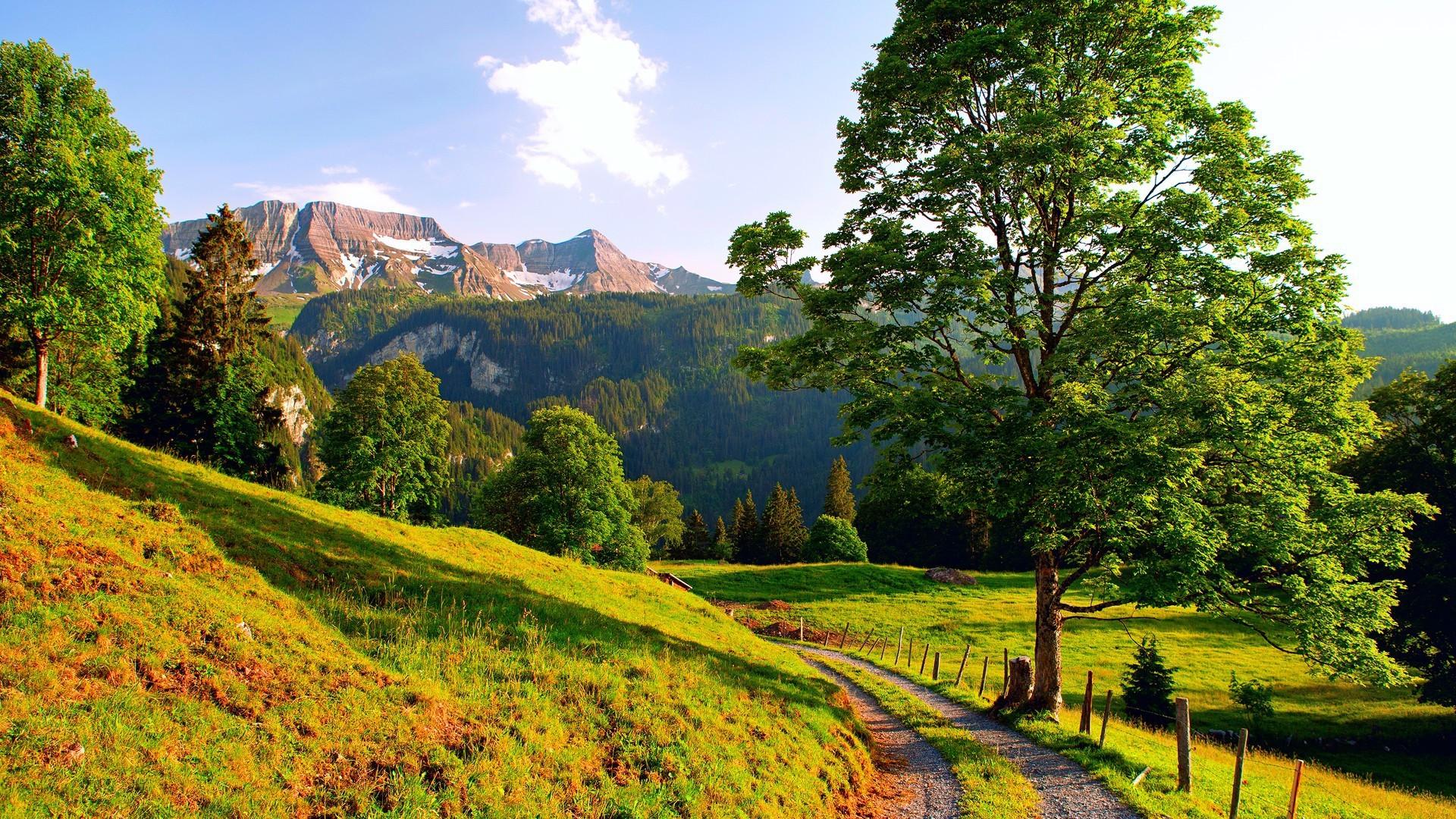 Картинки с летним пейзажем