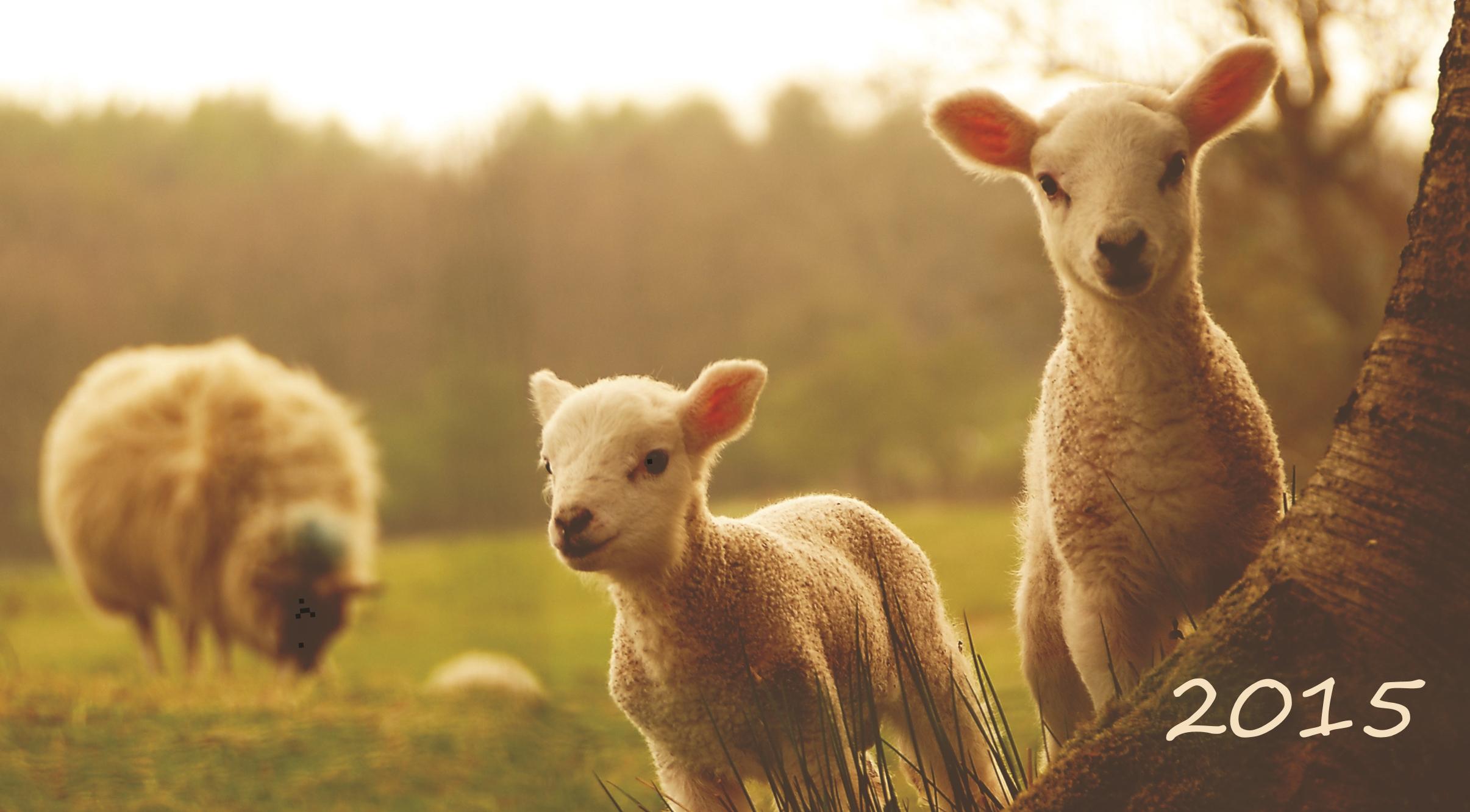New_Year_wallpapers_New_Year_2015_sheep_088769_.jpg