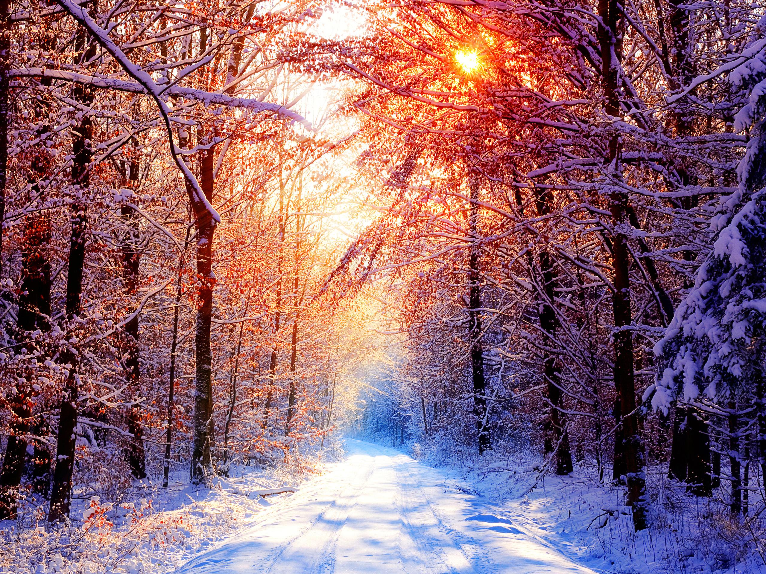 Зимний лес картинки сохранить, добрым утром