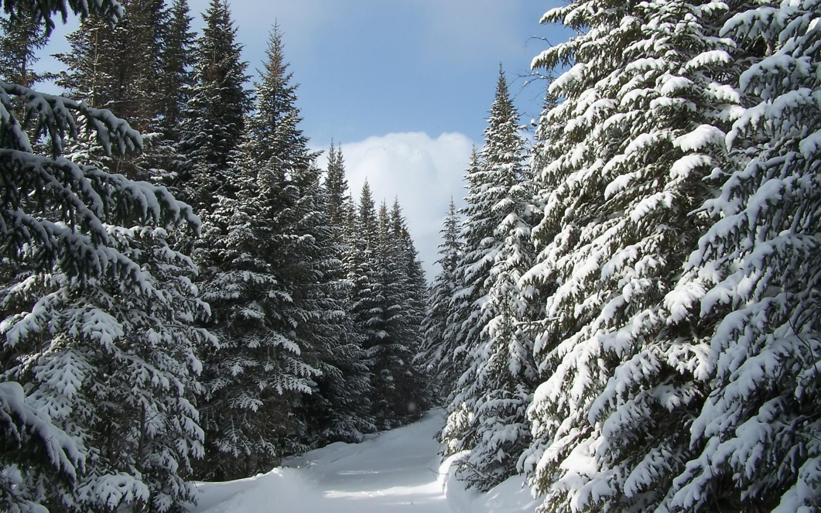 Днем, красивые открытки зима в лесу