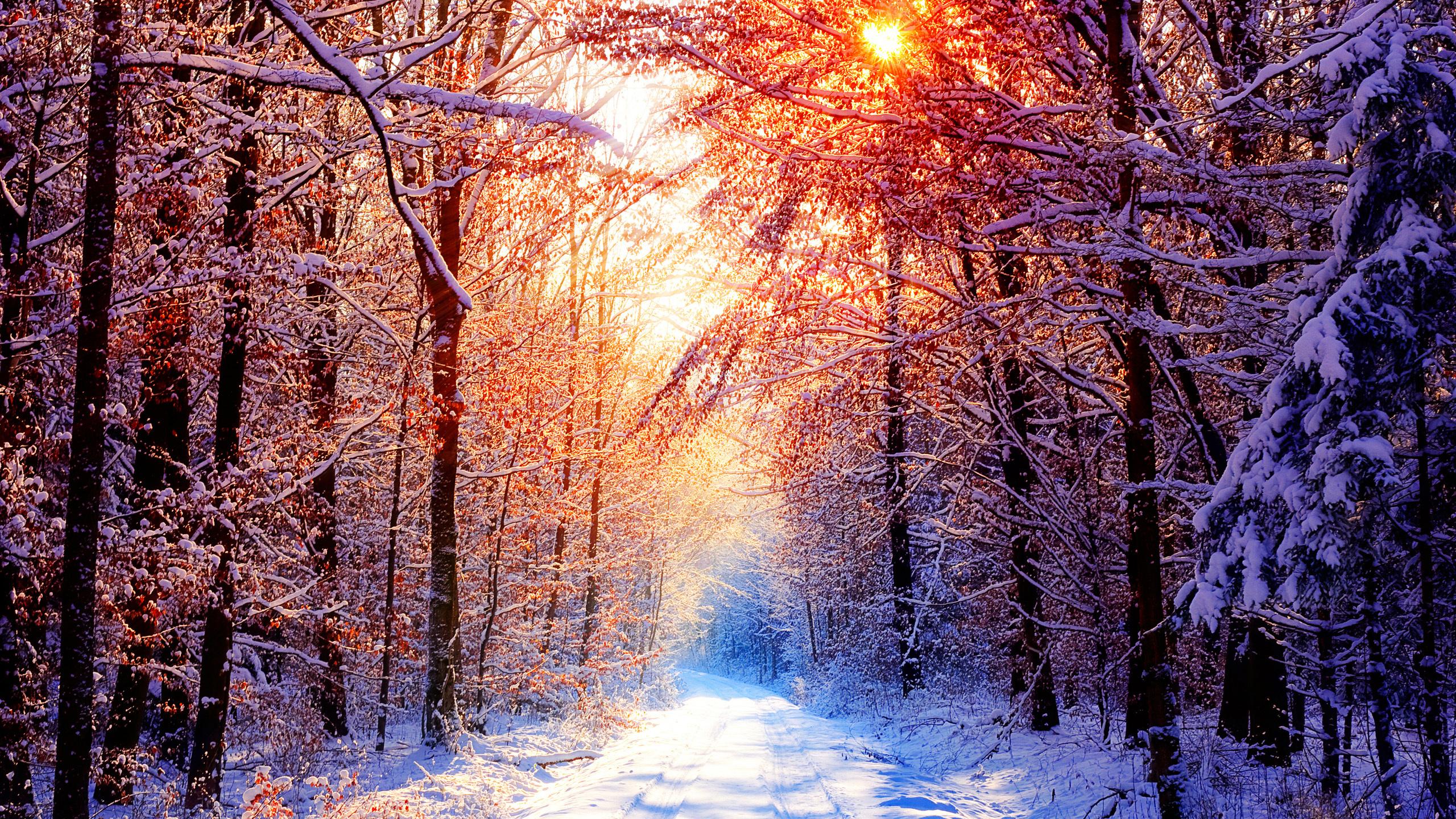 Красивые открытки зима в лесу, ночи