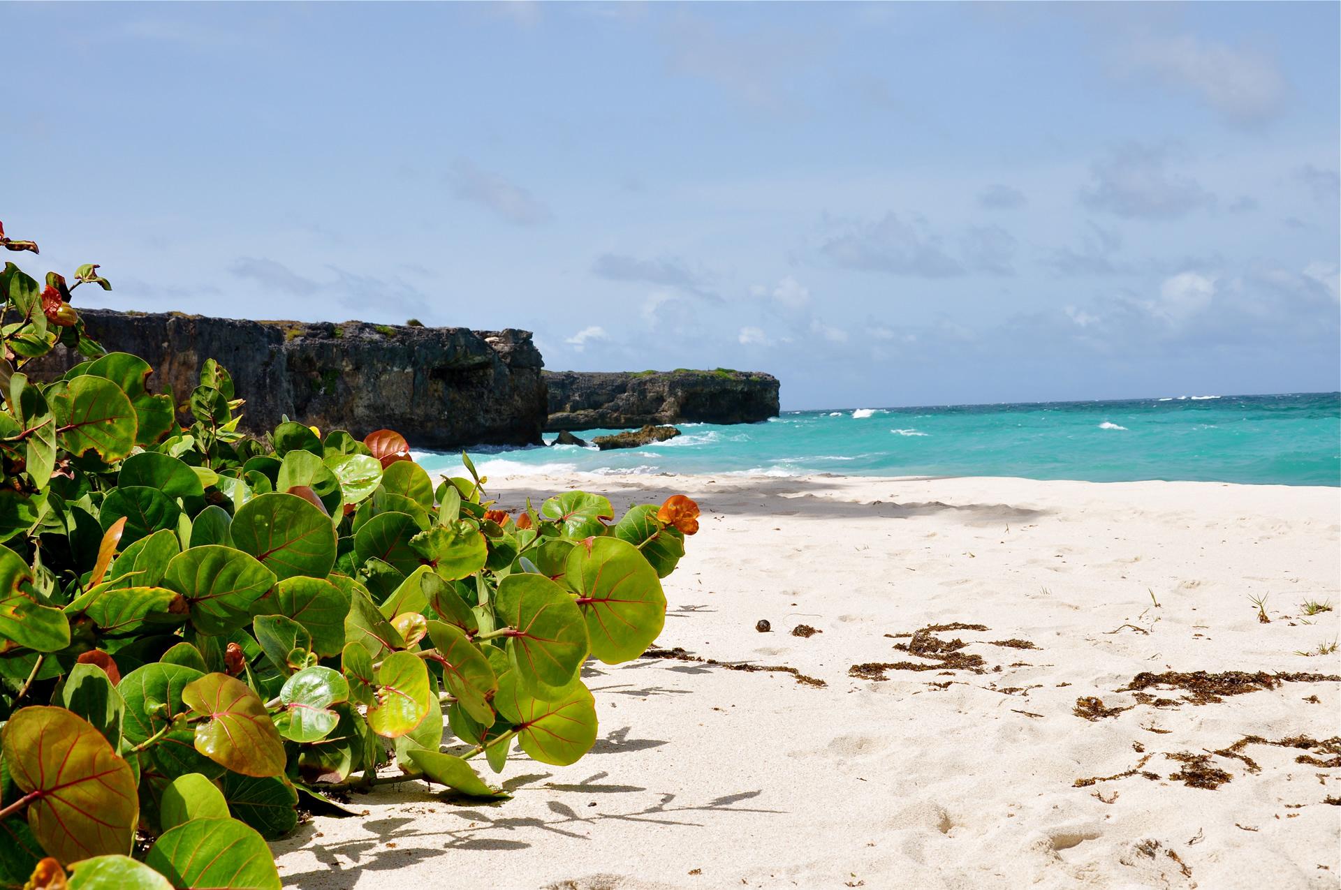 фото пляжей барбадоса возвращалась тетрадям течение