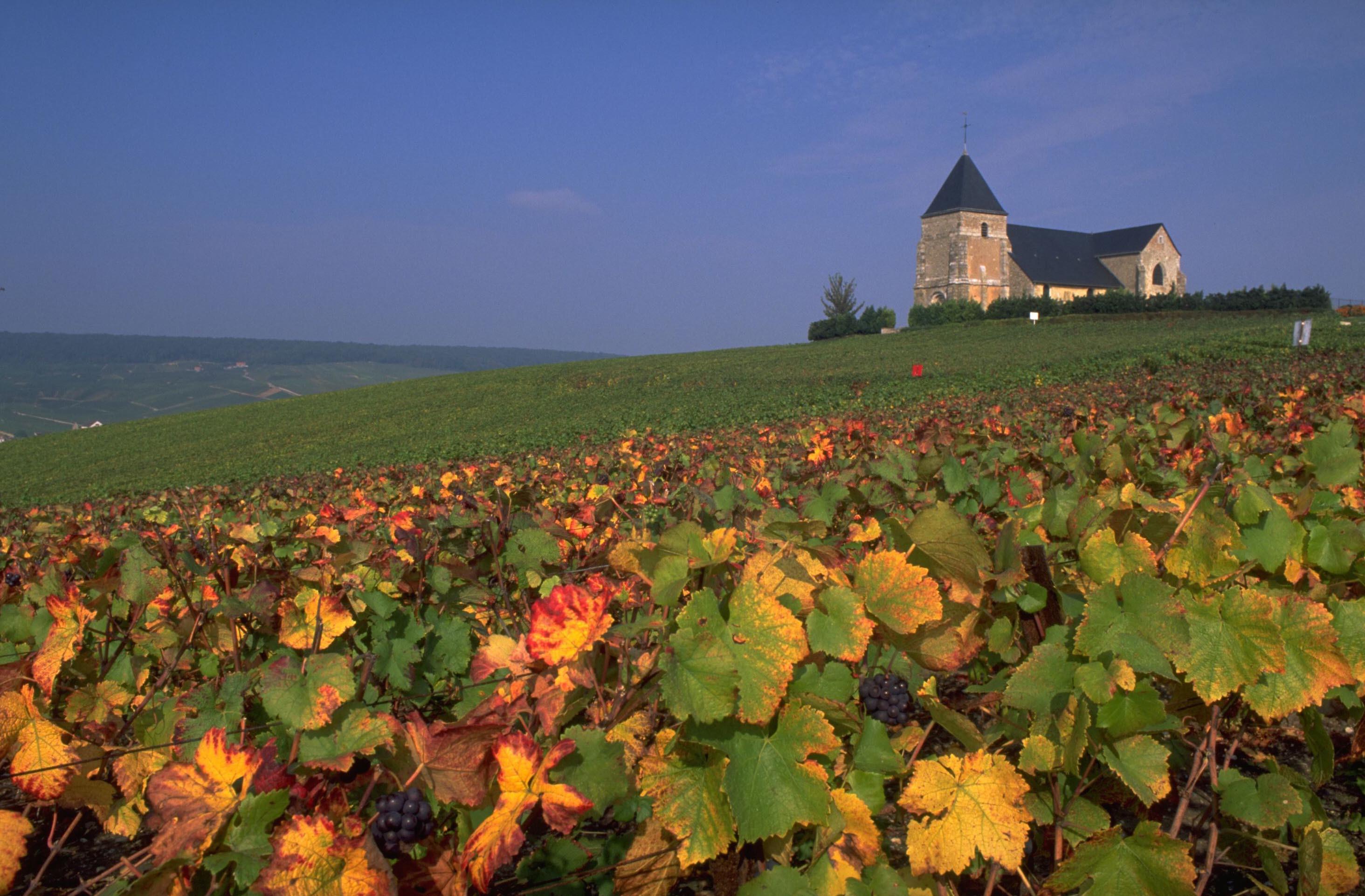 Vineyard in the champagne region france wallpapers and for Champagne region in france