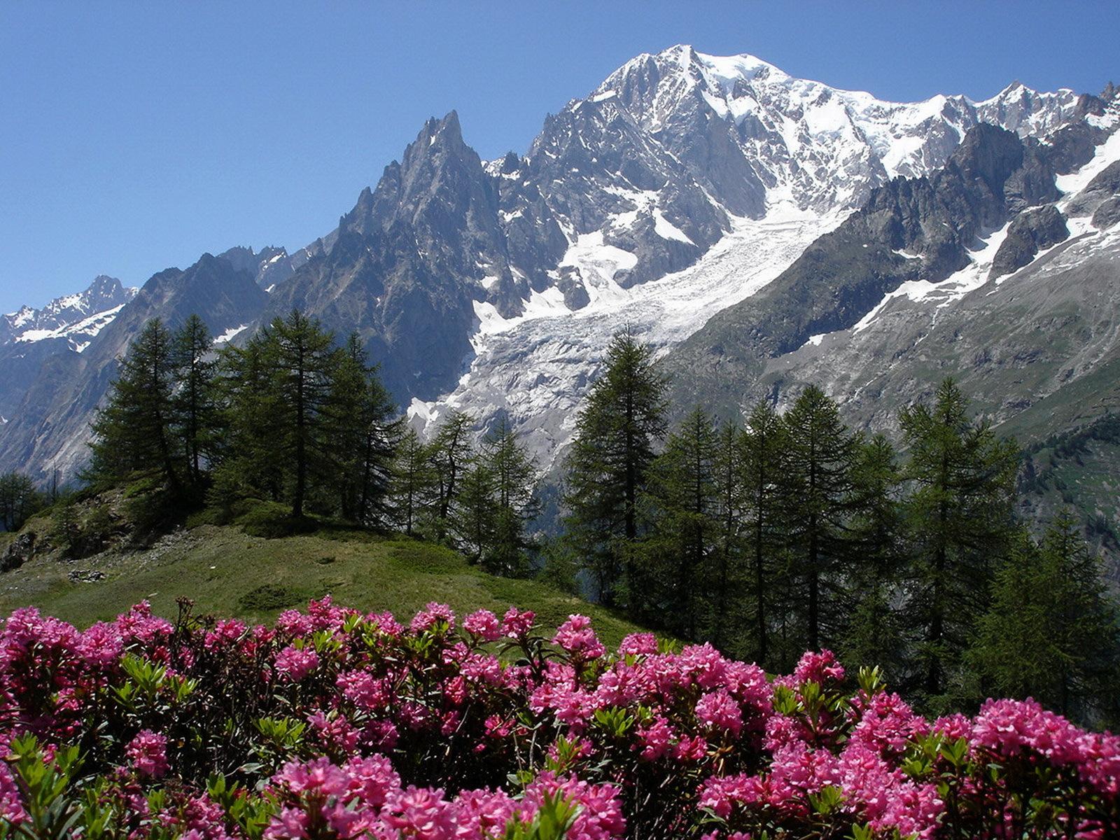 цветущие горы картинка производится монтаж